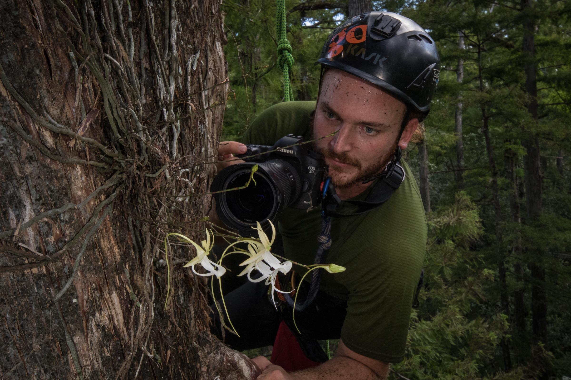 Ecologist Peter Houlihan hangs from a climbing harness as he inspects a ghost orchid 50 feet up in a bald cypress tree. Photograph by Mac Stone