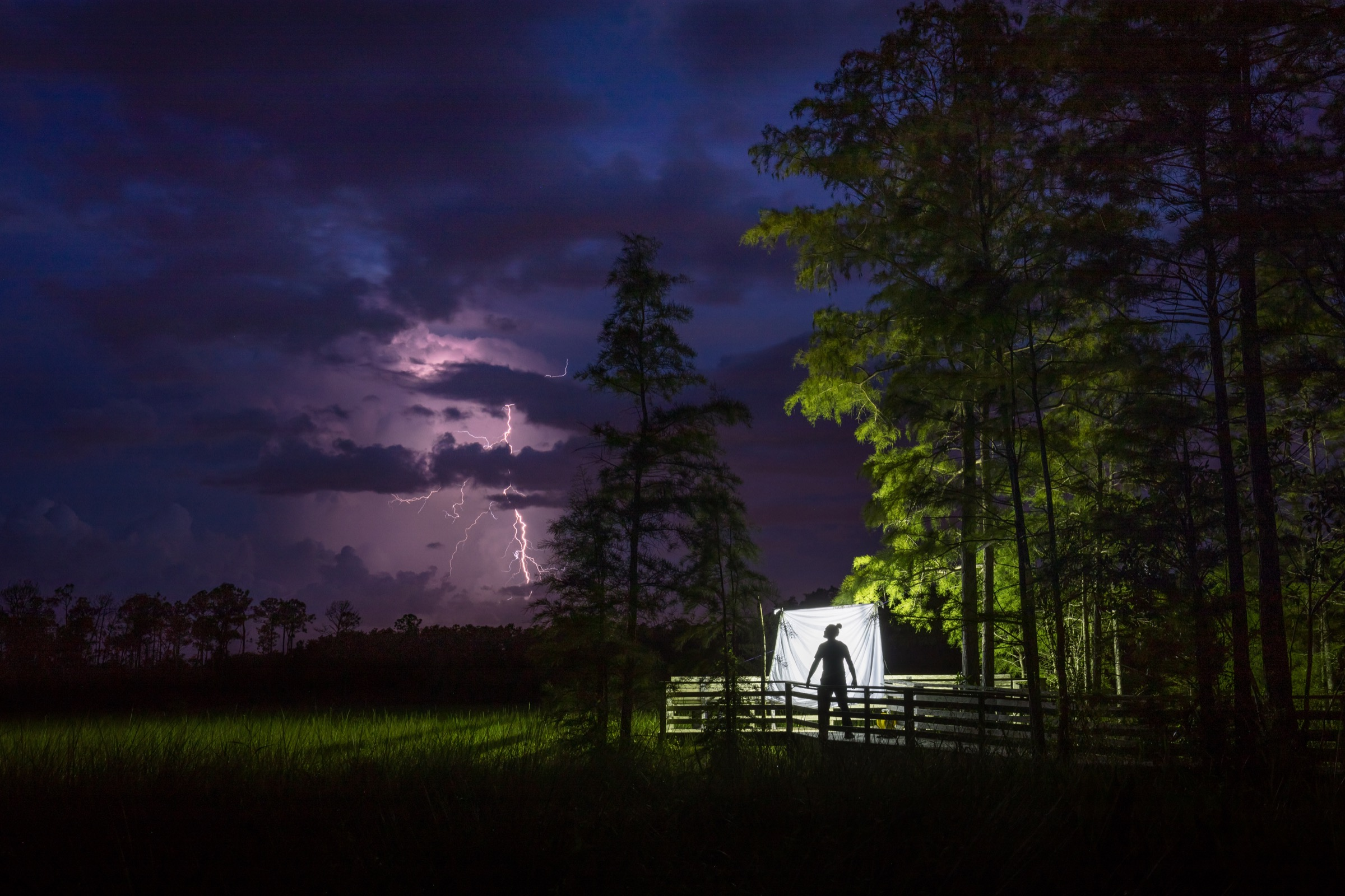 Under the veil of night, ecologist Peter Houlihan inspects a light trap designed to attract nocturnal insects in Corkscrew Swamp. Minutes after this image was captured, a giant sphinx moth flew to the trap, the first time in six years of light trapping that Houlihan managed to attract one. Photograph by Mac Stone