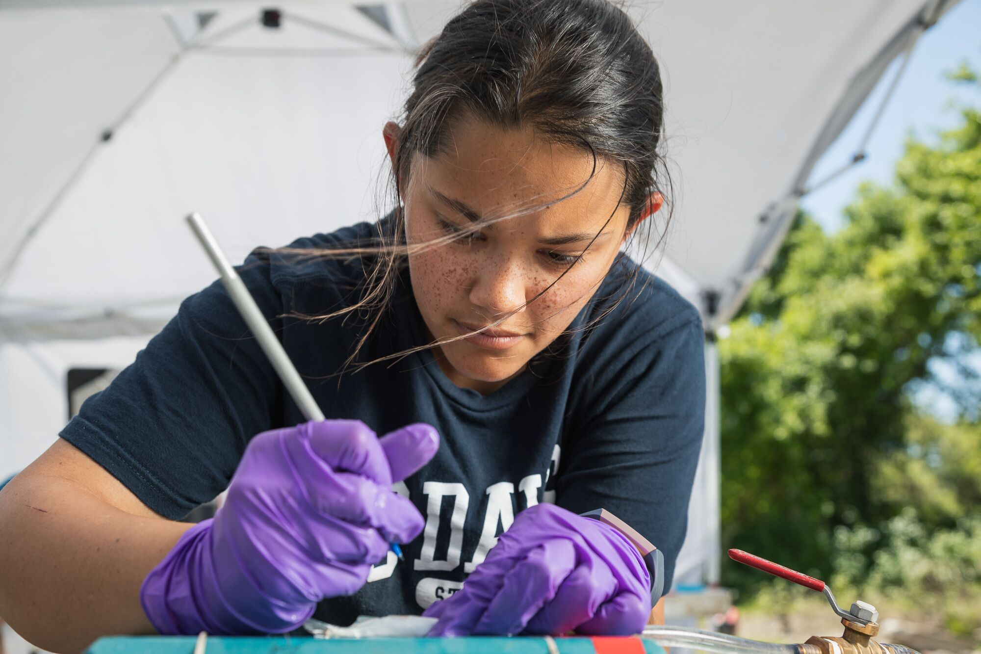 Rachelle Tallman, a graduate student at the University of California, Davis, makes an incision in the abdomen of a salmon fry to insert a tracking tag.