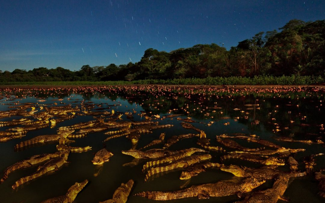 Night of the Caiman