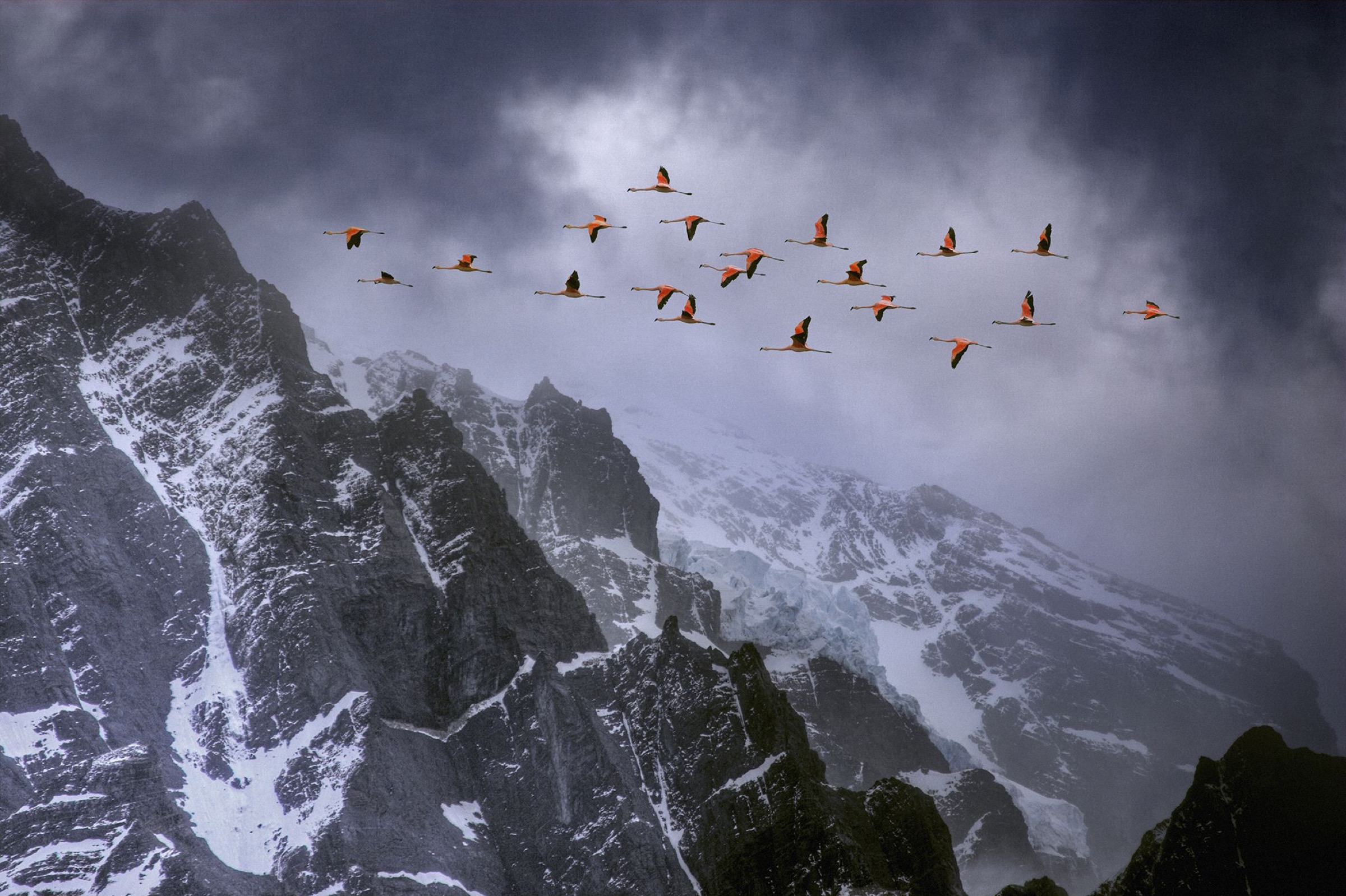 Chilean flamingos (Phoenicopterus chilensis) in flight over mountain peaks with glacier in the distance, Torres Del Paine National Park, Chile. Winner of Landscape category, Nature's Best / Windland Smith Rice Awards competition 2010