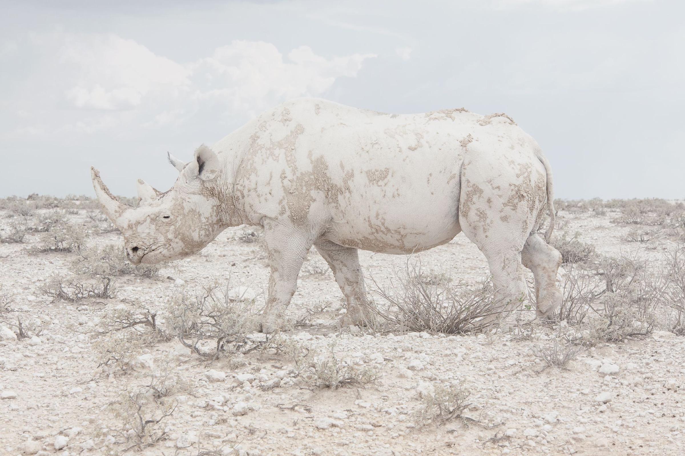 Black Rhino, Etosha National Park, Namibia - 2015