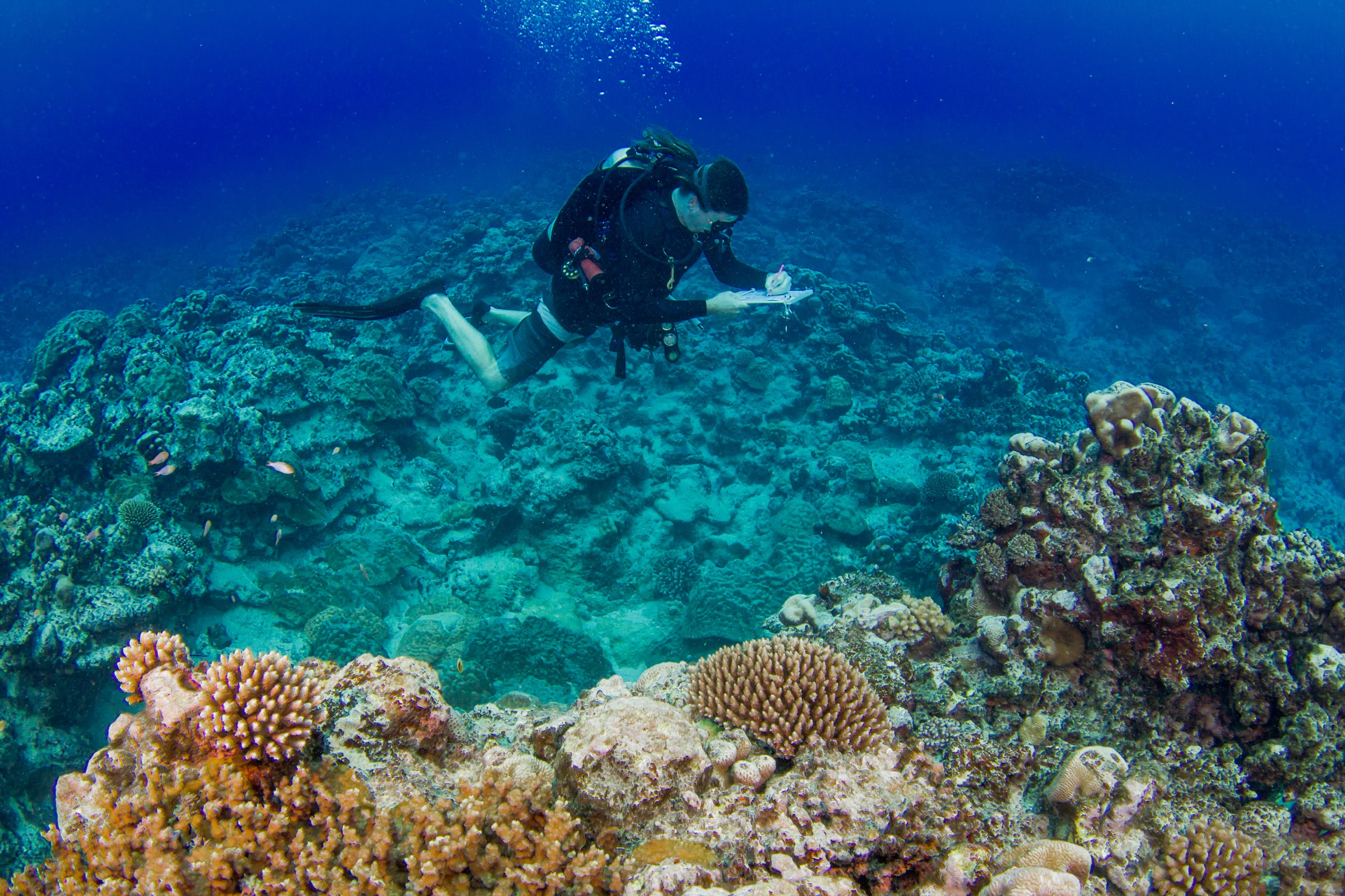 Stuart Sandin conducts a fish count along a section of reef off Rarotonga. Photograph by Brian Zgliczynski/100 Island Challenge