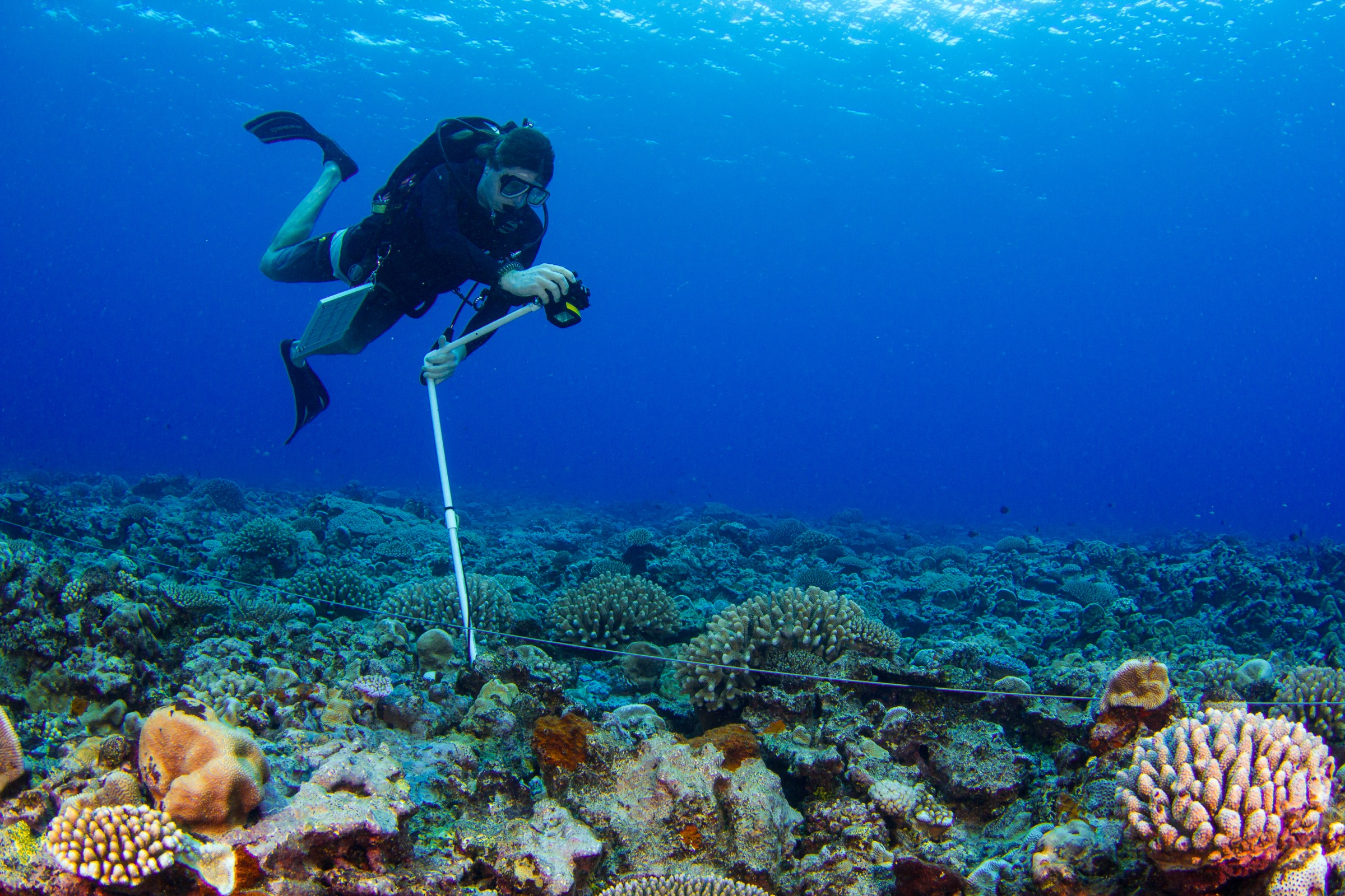 Stuart Sandin conducts a photoquad survey, taking images of the reef at regular intervals along a 25-meter (82-foot) transect. Photograph by Brian Zgliczynski/100 Island Challenge