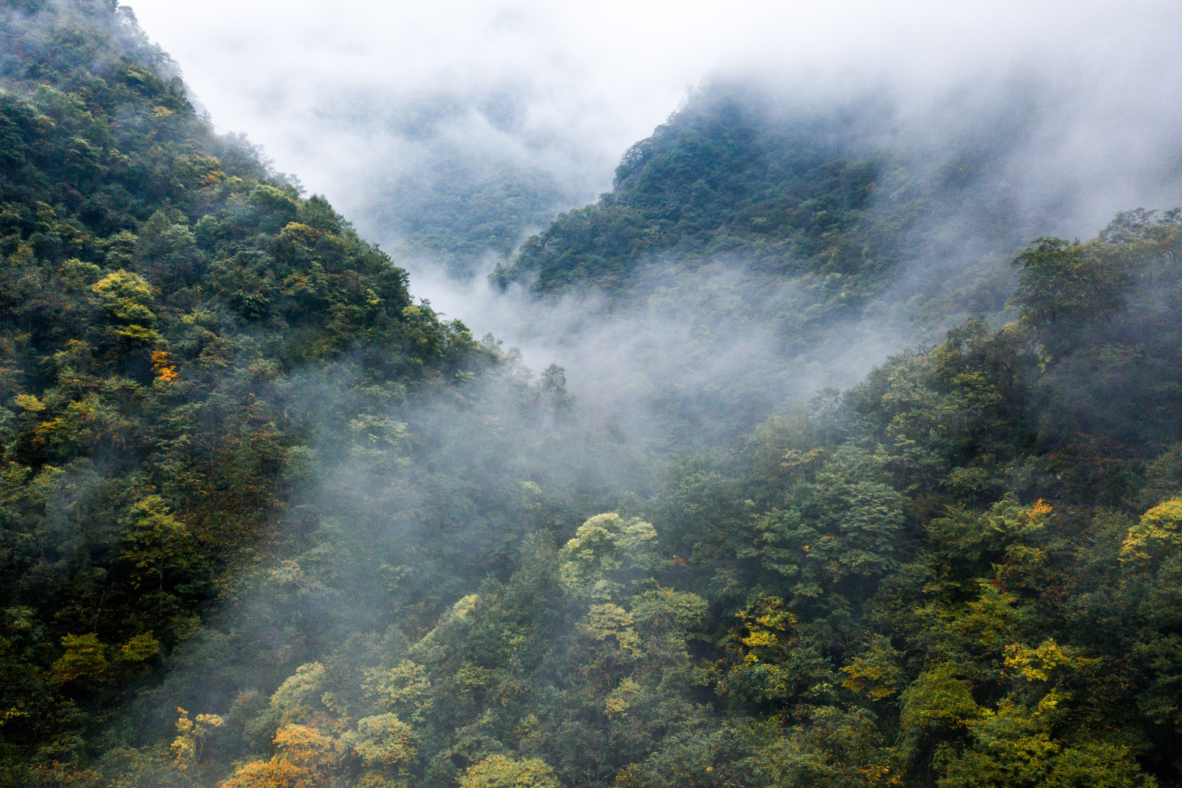 The misty Min Mountains of Guanba Valley in Sichuan provide some of the last remaining habitat for the giant panda. Photograph by Kyle Obermann