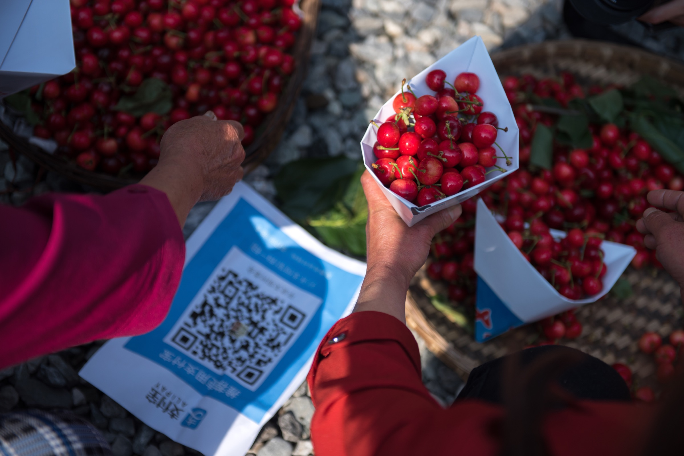 Ripe cherries are sold for 2 yuan duringa media event held by Ant Financial's forest program in the newly built pavilion at Guanba. Buyers can pay for the produce with their cell phones by scanning QR codes. Photograph by Kyle Obermann