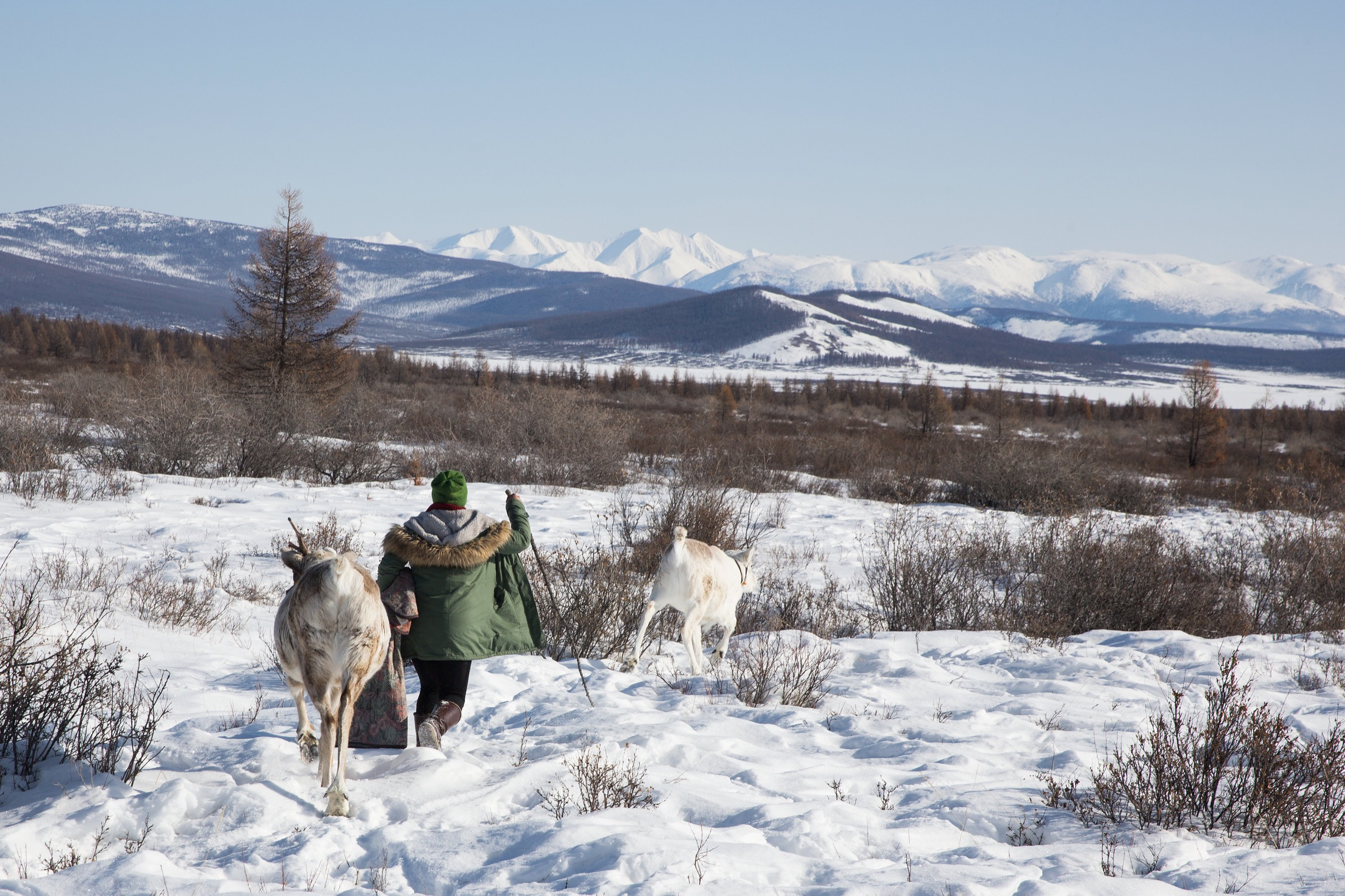 A Dukha herder heads to a camp in the East Taiga, with reindeer in tow.