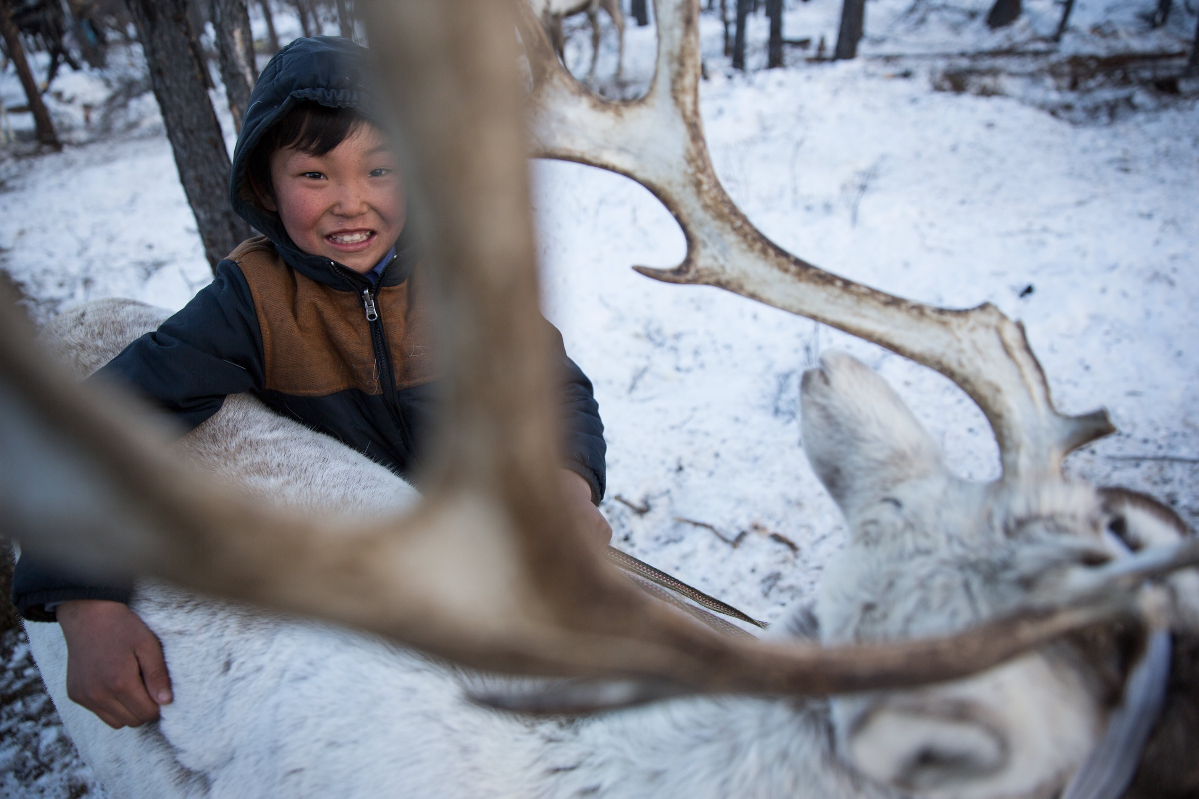 Reindeer are at the center of Dukha life and culture. Since the animals are trained to provide transportation as well as milk, the reindeer are tame enough for Dukha children, like this boy, to play with them.
