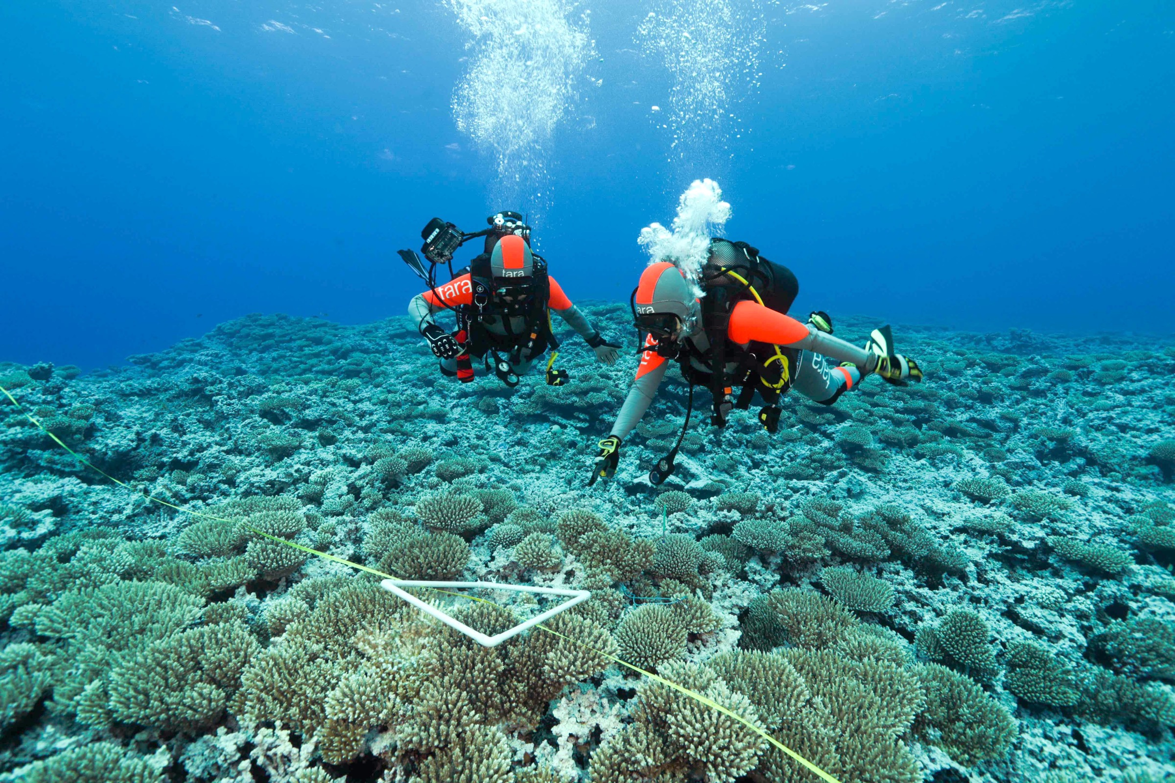 Divers conduct a coral survey off Ducie Island, an uninhabited atoll in the Pitcairn Islands. Photograph by Pete West / BioQuest Studios / TARA Expeditions Foundation