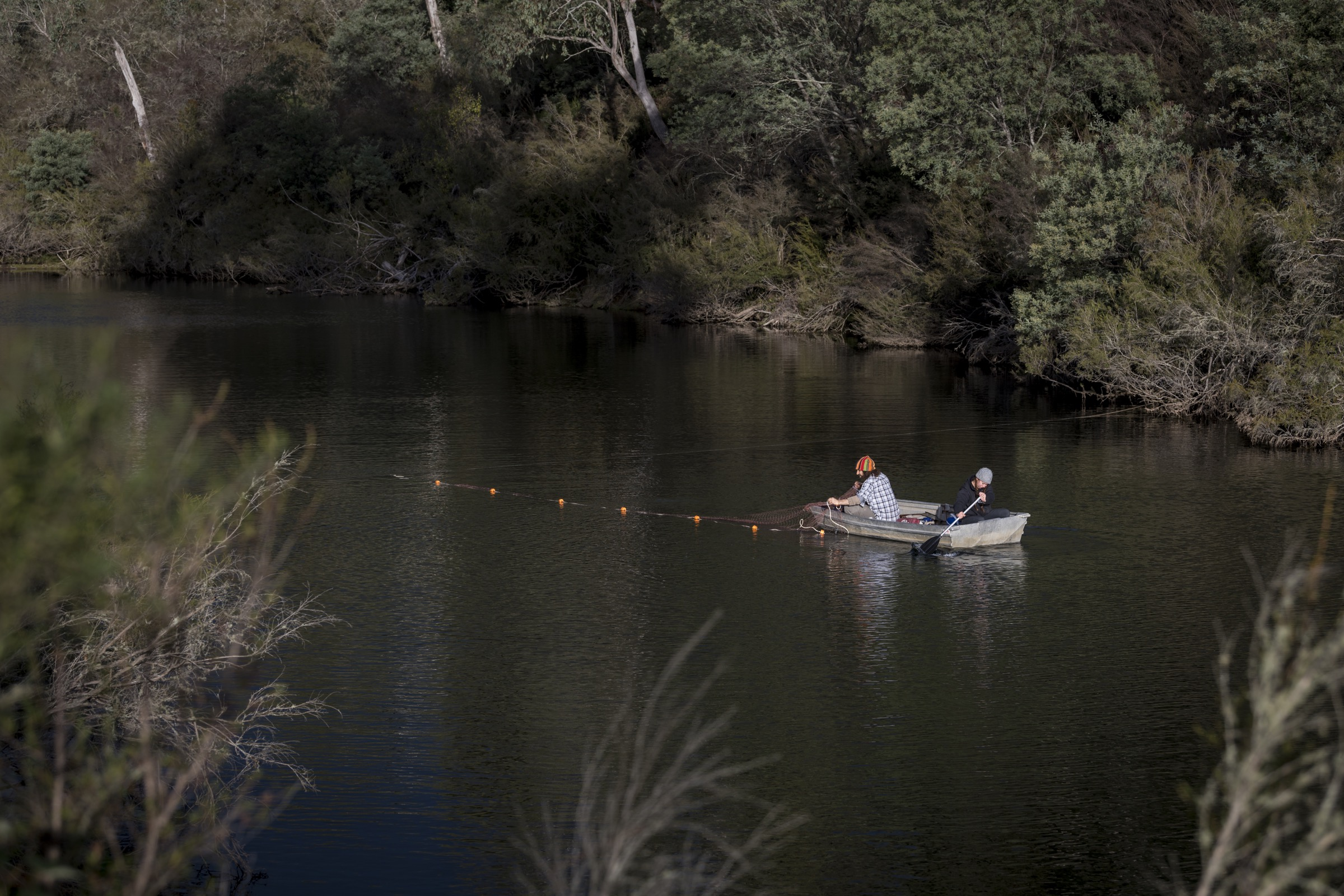Researchers place nets in the Mitta Mitta River near Dartmouth, Victoria in an attempt to trap and mark resident platypuses.