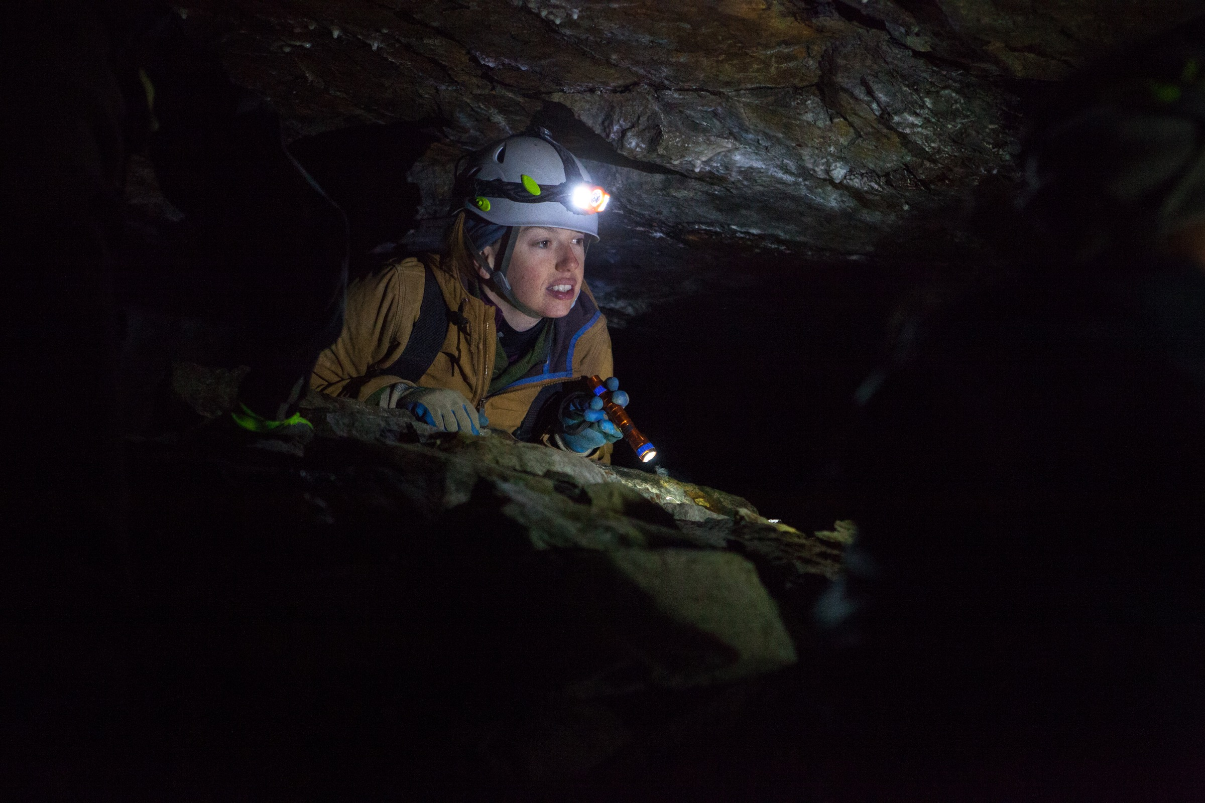 Mandy Bailey of the New York State Department of Environmental Conservation peers into a crevice during a survey in Upstate New York. Photograph by Geoffrey Giller