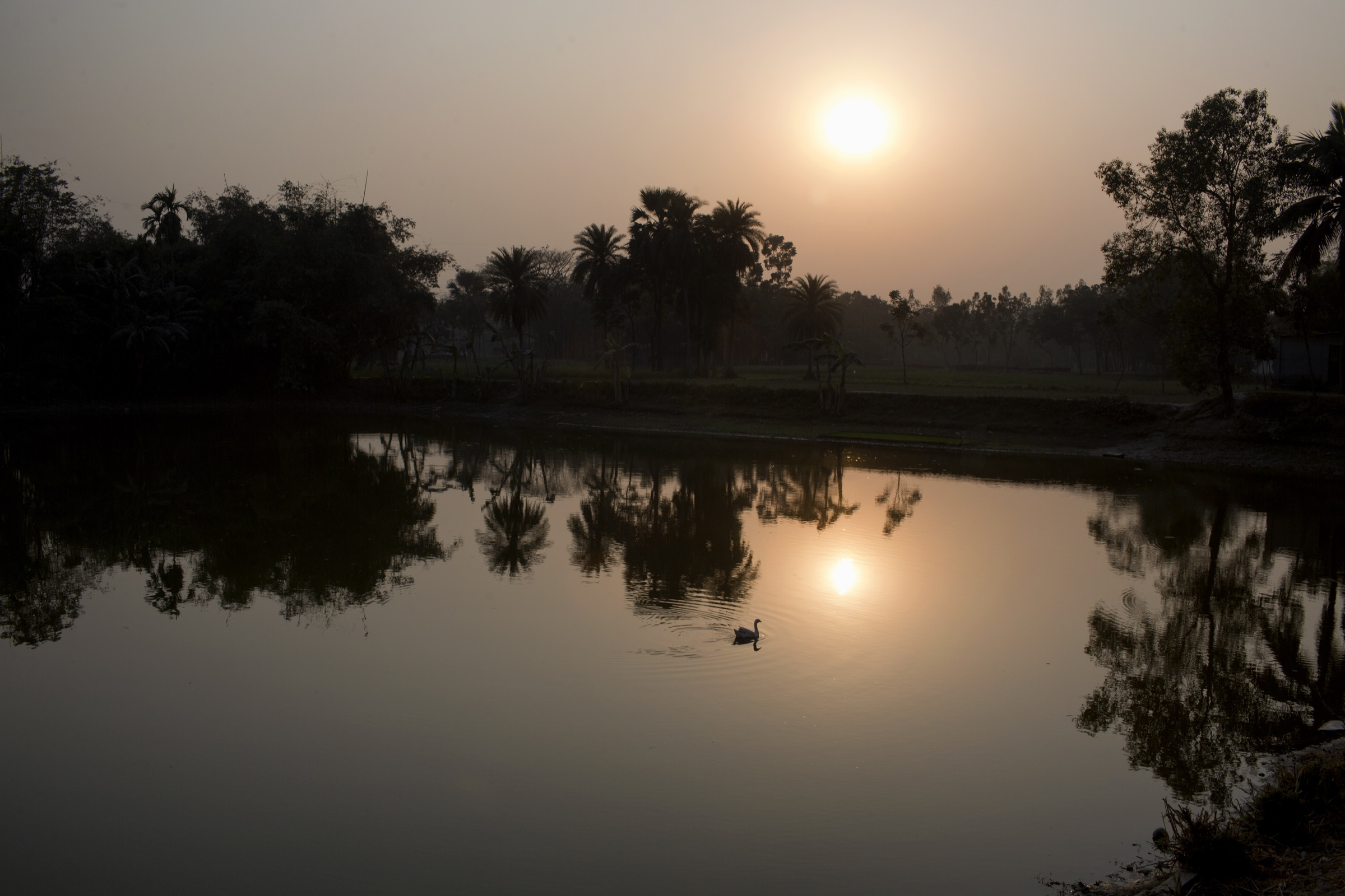 Dawn breaks over a small pond, not far from northern Bangladesh's Rangpur City. Photograph by A.M. Ahad