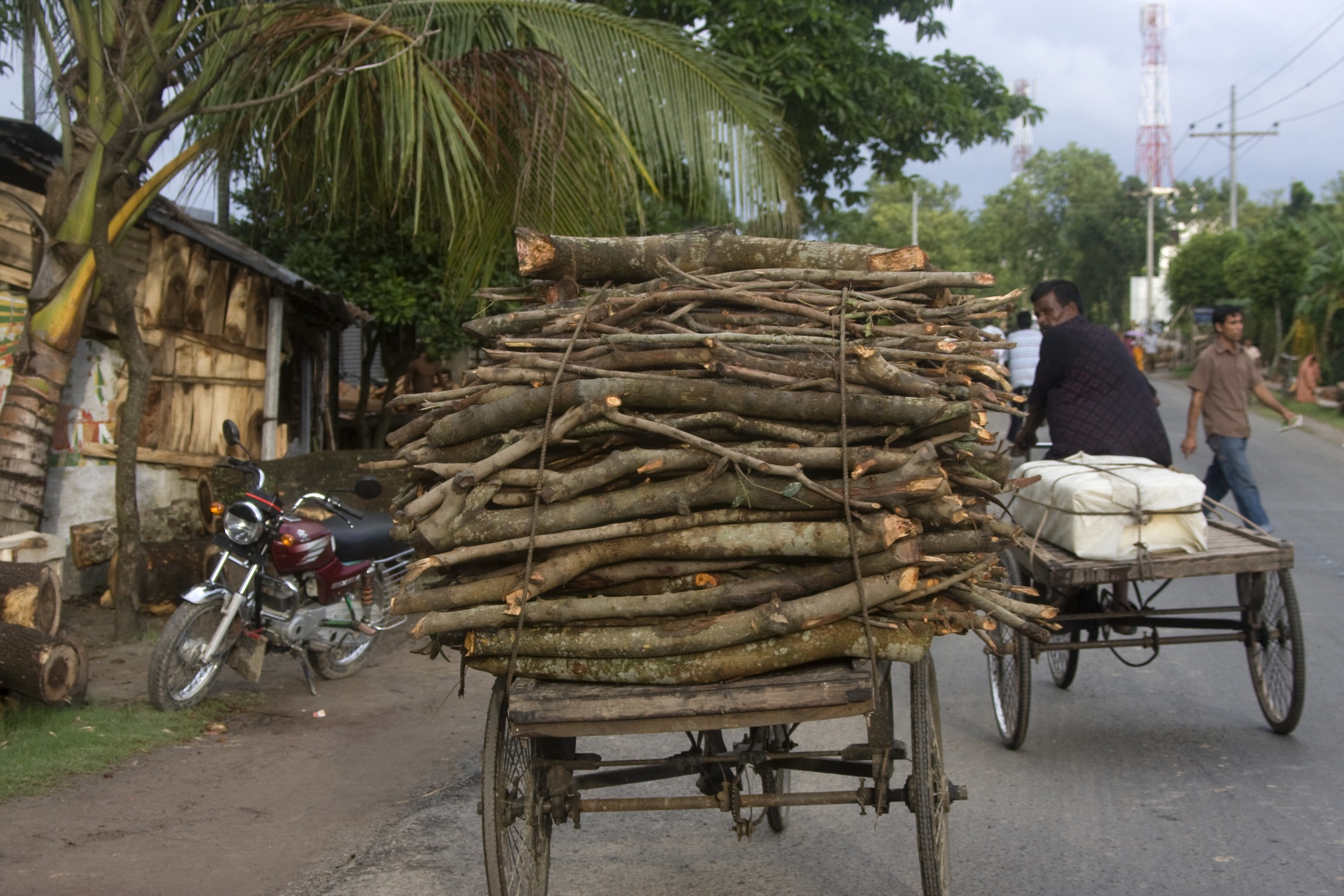 Deforestation and the extraction of forest products, like this collection of firewood from the Ganges Delta region of Bangladesh, continues to put stress on these ecosystems and the organisms that live there. Photograph by David Woodfall