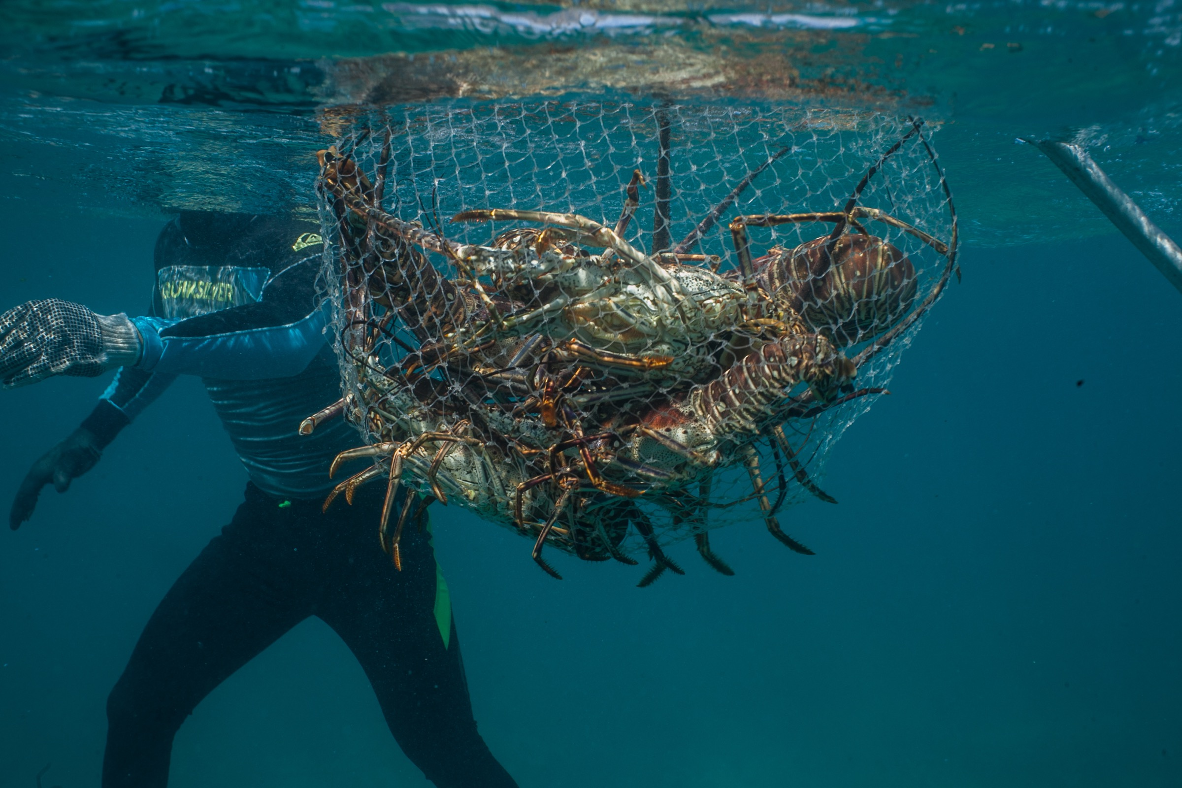 Ricardo Pérez Mendoza brings a net full of lobsters up to a lancha off Punta Allen, Mexico. Photograph by Dominic Bracco II