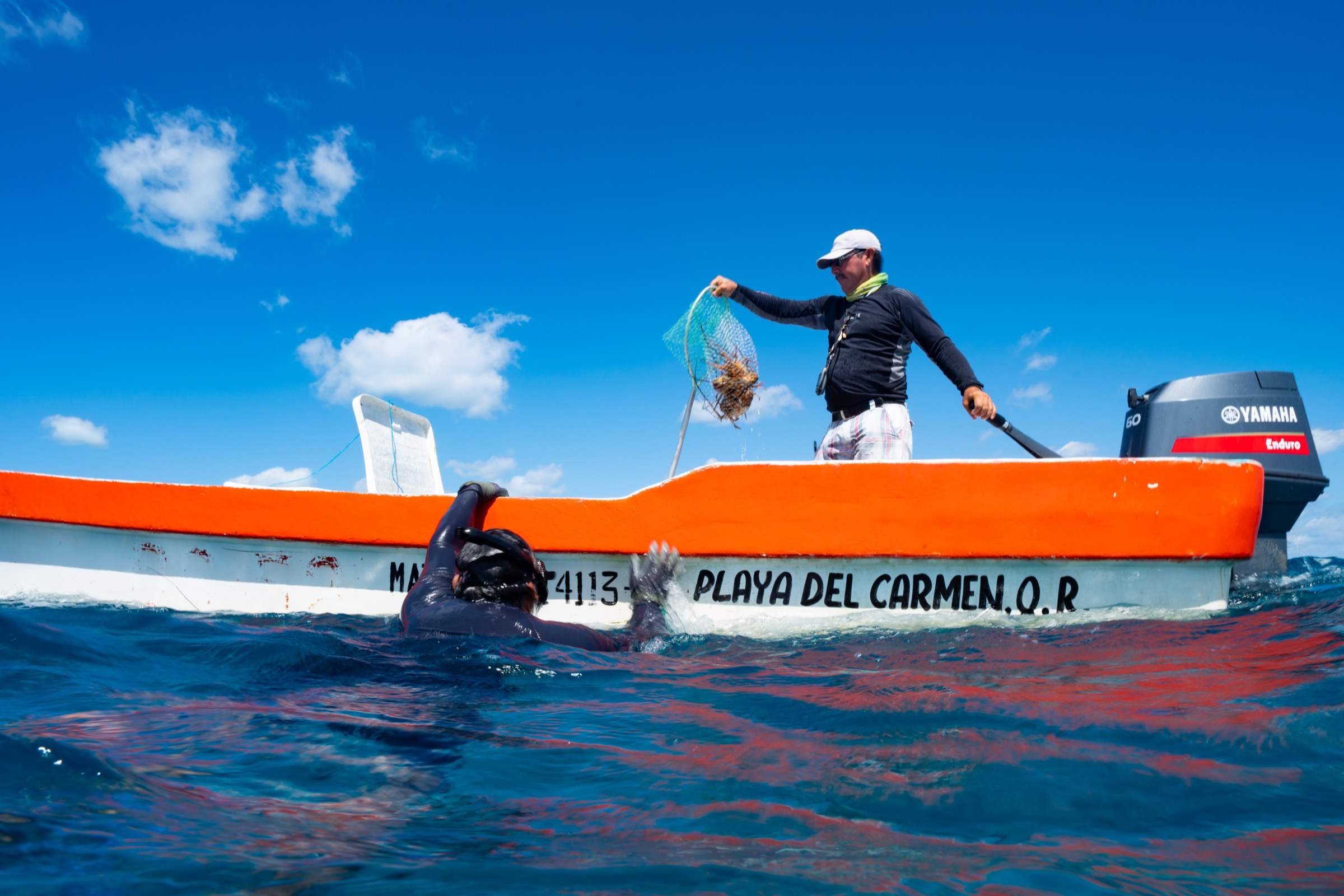 Magdiel Naal hands a net full of lobsters up to Emilio Pérez Mendoza. Photograph by Steve De Neef