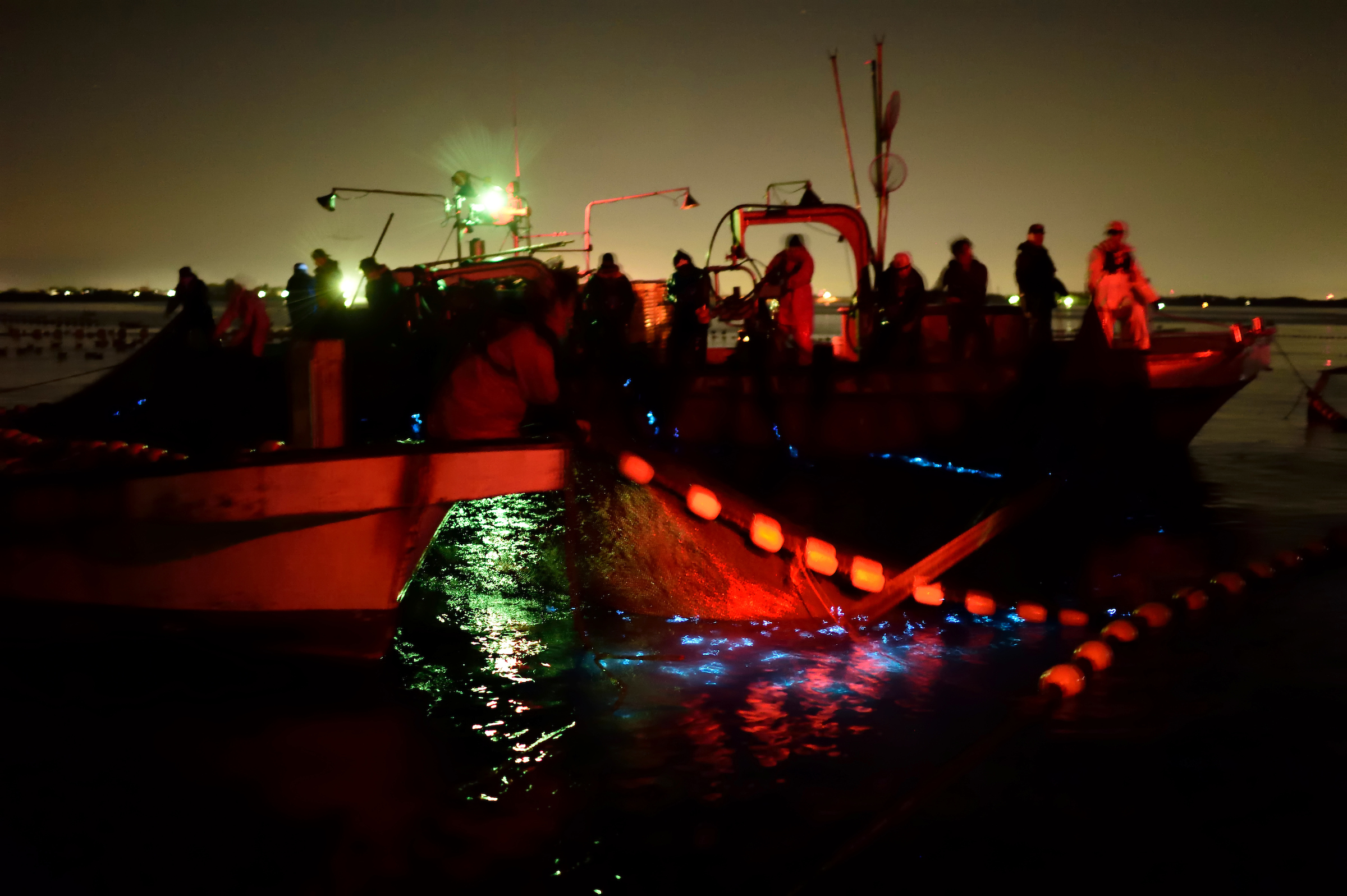 Commercial fishing vessels haul up nets filled with glowing firefly squid each spring in Toyama Bay.