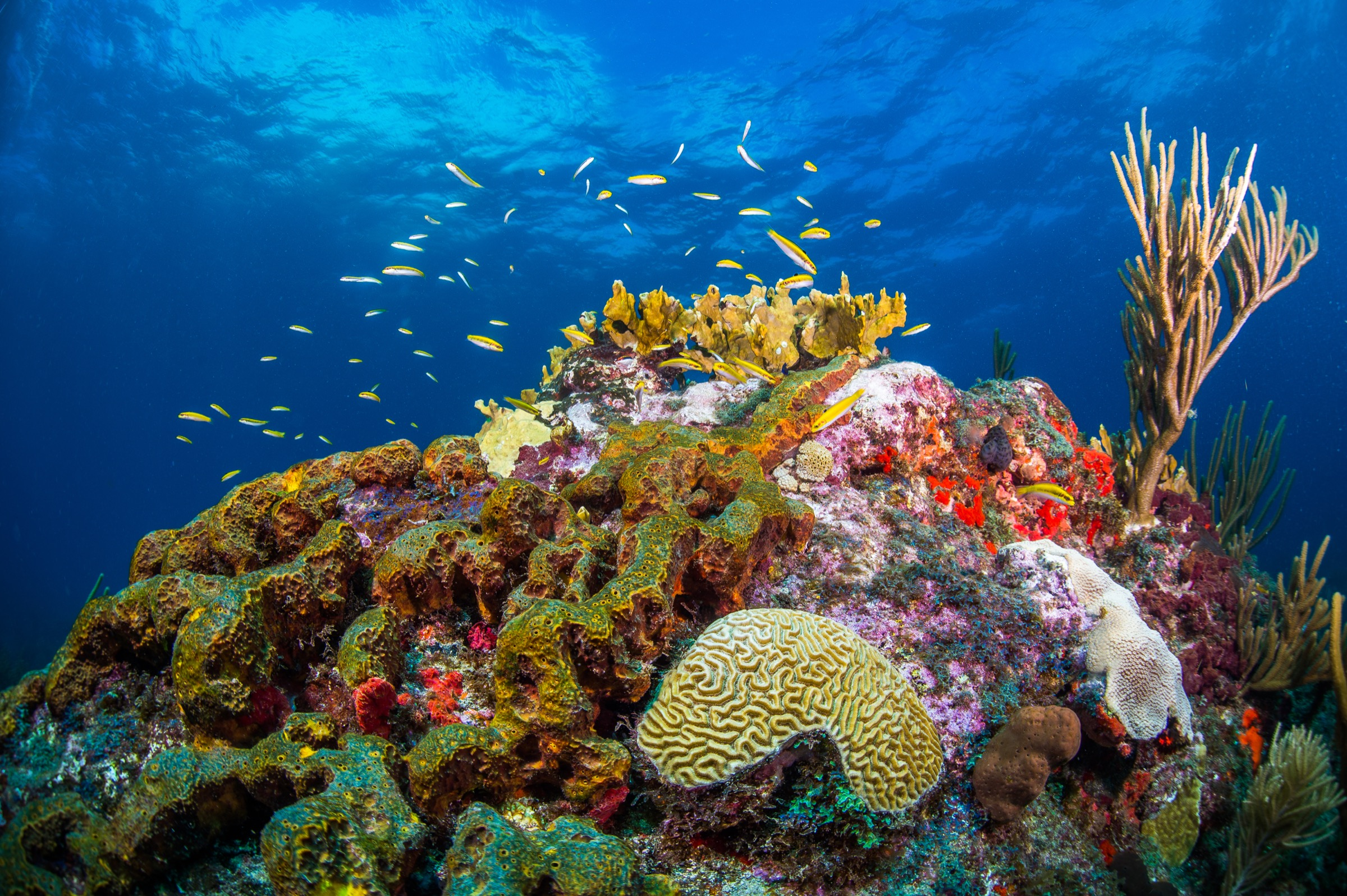 A healthy and biologically diverse coral outcropping off the Caribbean island of Sint Eustatius