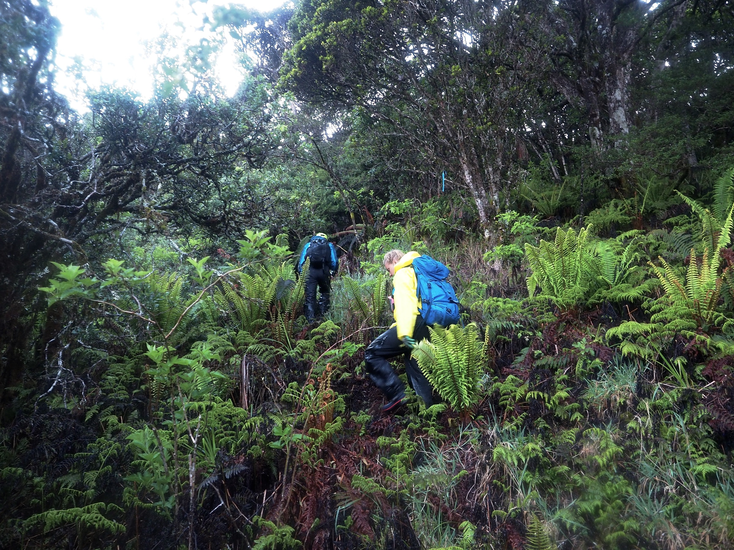 Seth Judge and Jenna Fish negotiate the steep terrain of the upper Kīpahulu Valley. Photograph by Jeremy Miller
