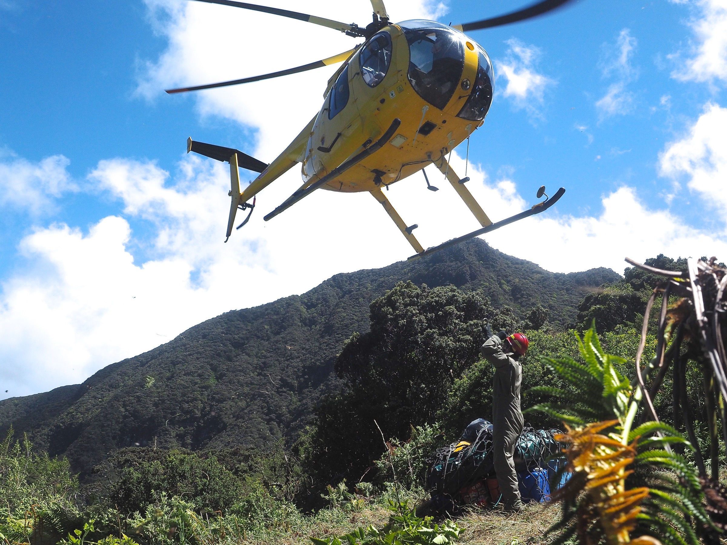 A Hughes 500D helicopter hovers over West Camp in the Kīpahulu Biological Reserve. Photograph by Jeremy Miller