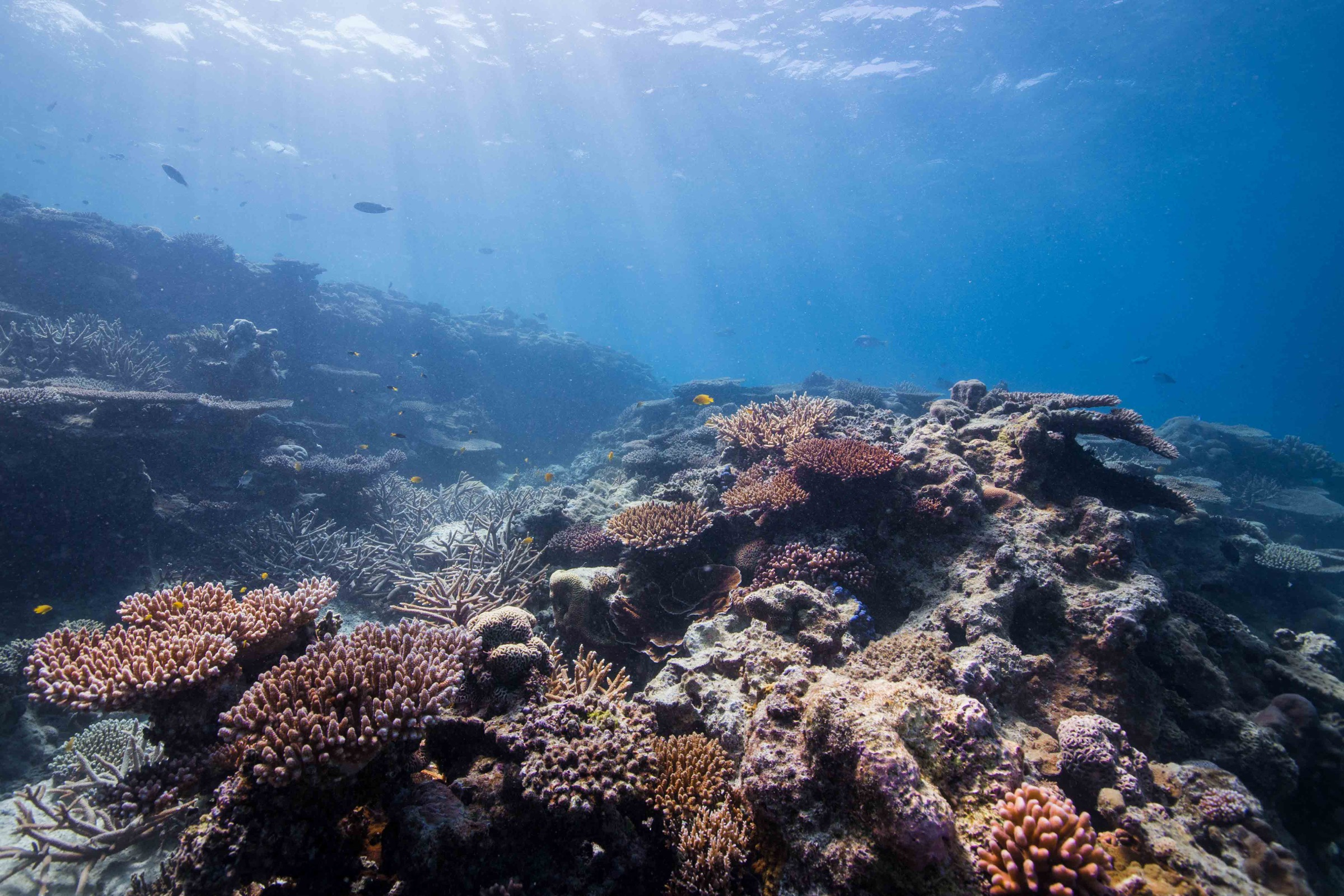 Corals create the all-important structure on which countless ocean creatures depend.