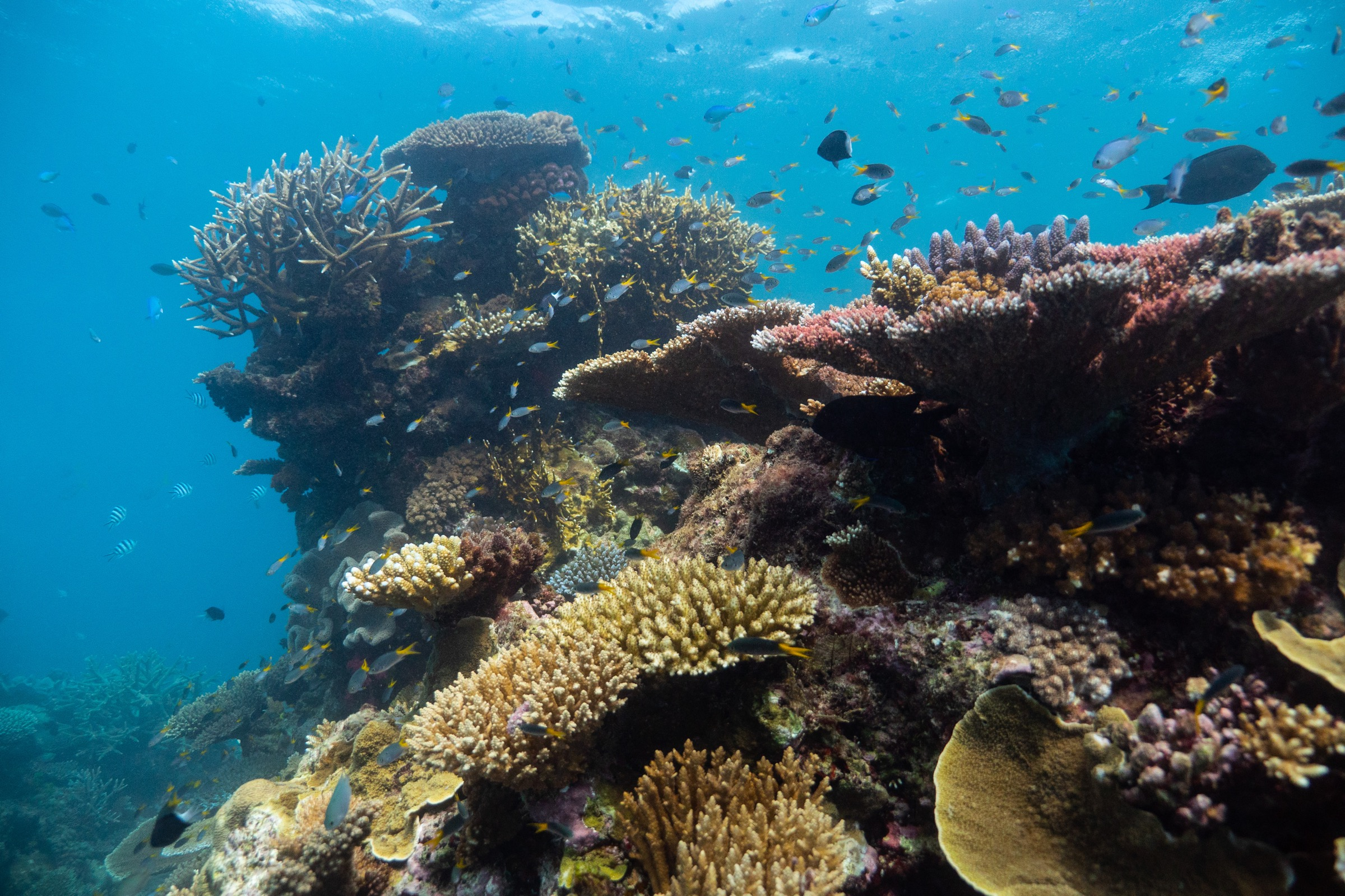 When coral reefs are intact and healthy, they provide habitat for countless ocean creatures.