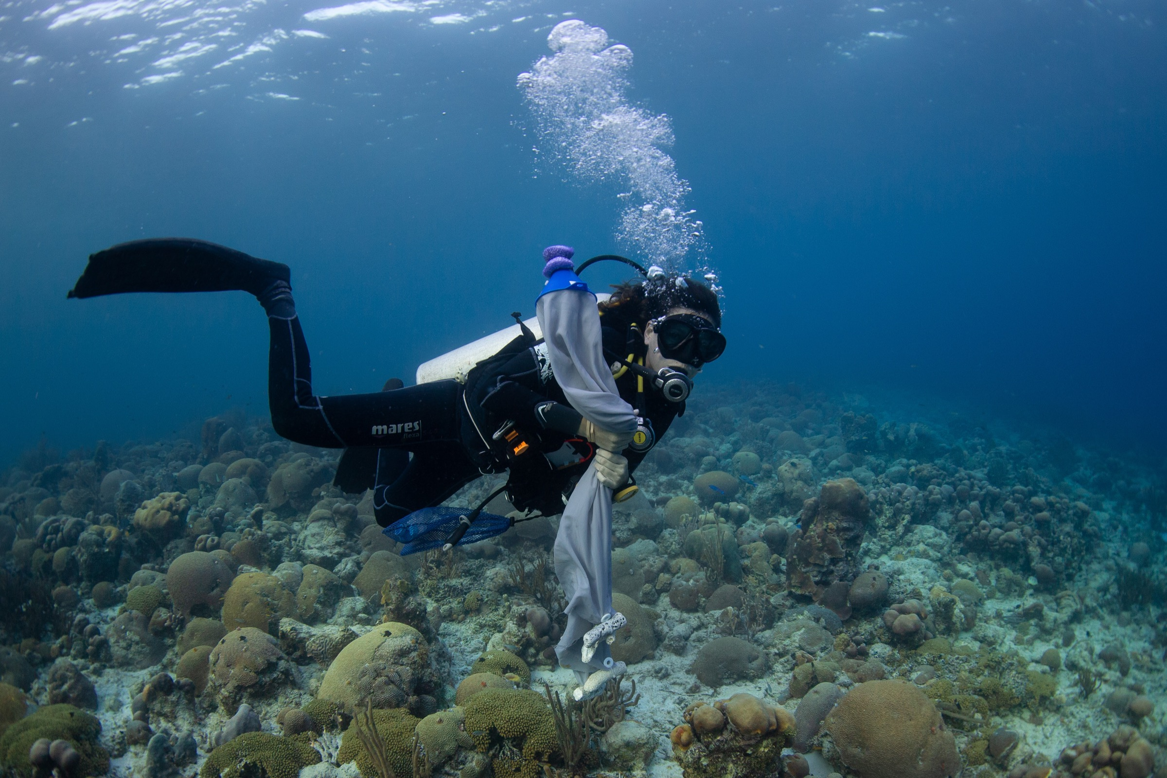 Valérie Chamberland carries nets to the site where she and workshop attendees are hoping to collect gametes from colonies of grooved brain coral (<em>Diploria labyrinthiformis</em>).
