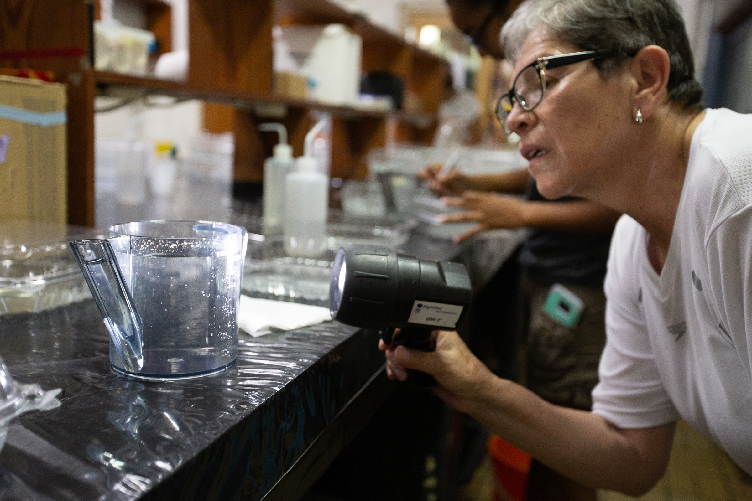Elvira Alvarado, a professor at the University of Bogotá, inspects a batch of fertilized coral eggs at the CARMABI Marine Research Station laboratory.