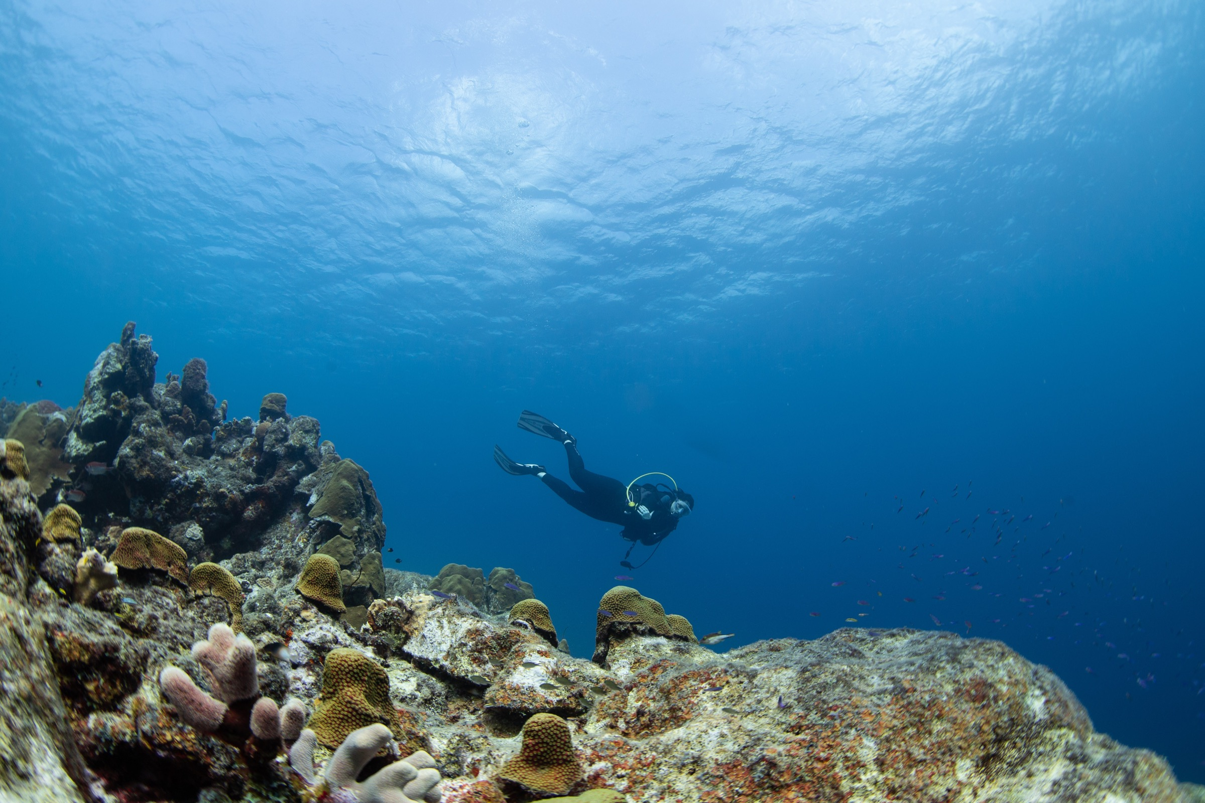 Valérie Chamberland descends over a coral reef off the coast of Curaçao.