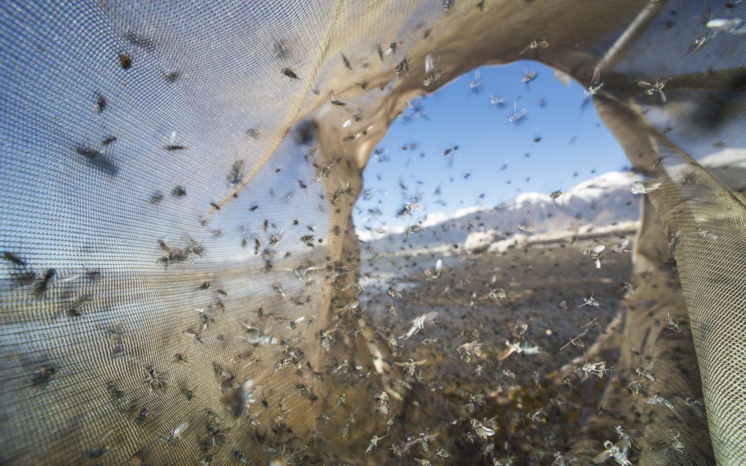 Scuba Flies