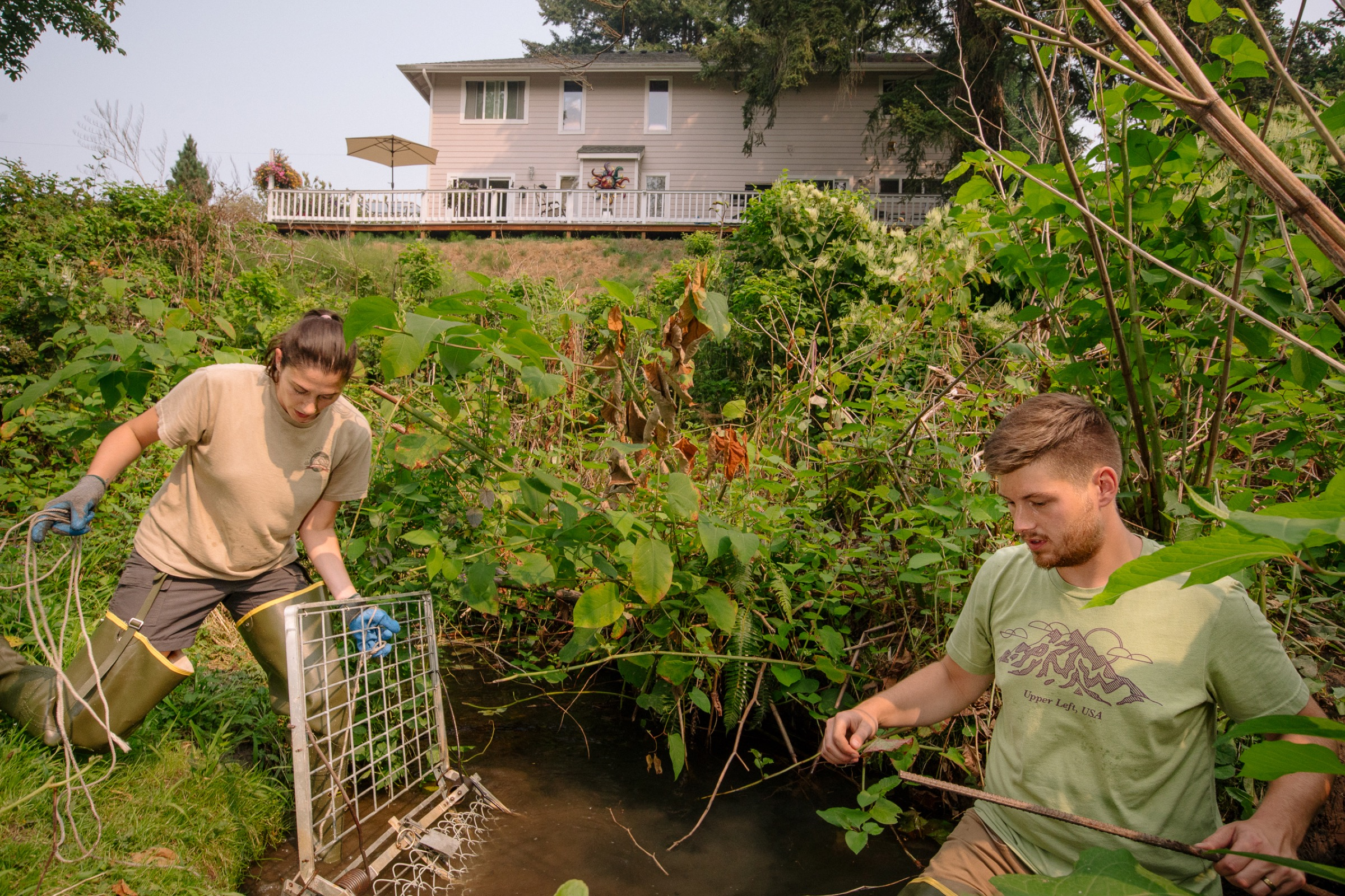 Tulalip Tribe biologists Molly Alves and David Bailey set a beaver trap along a creek in a North Seattle suburb.