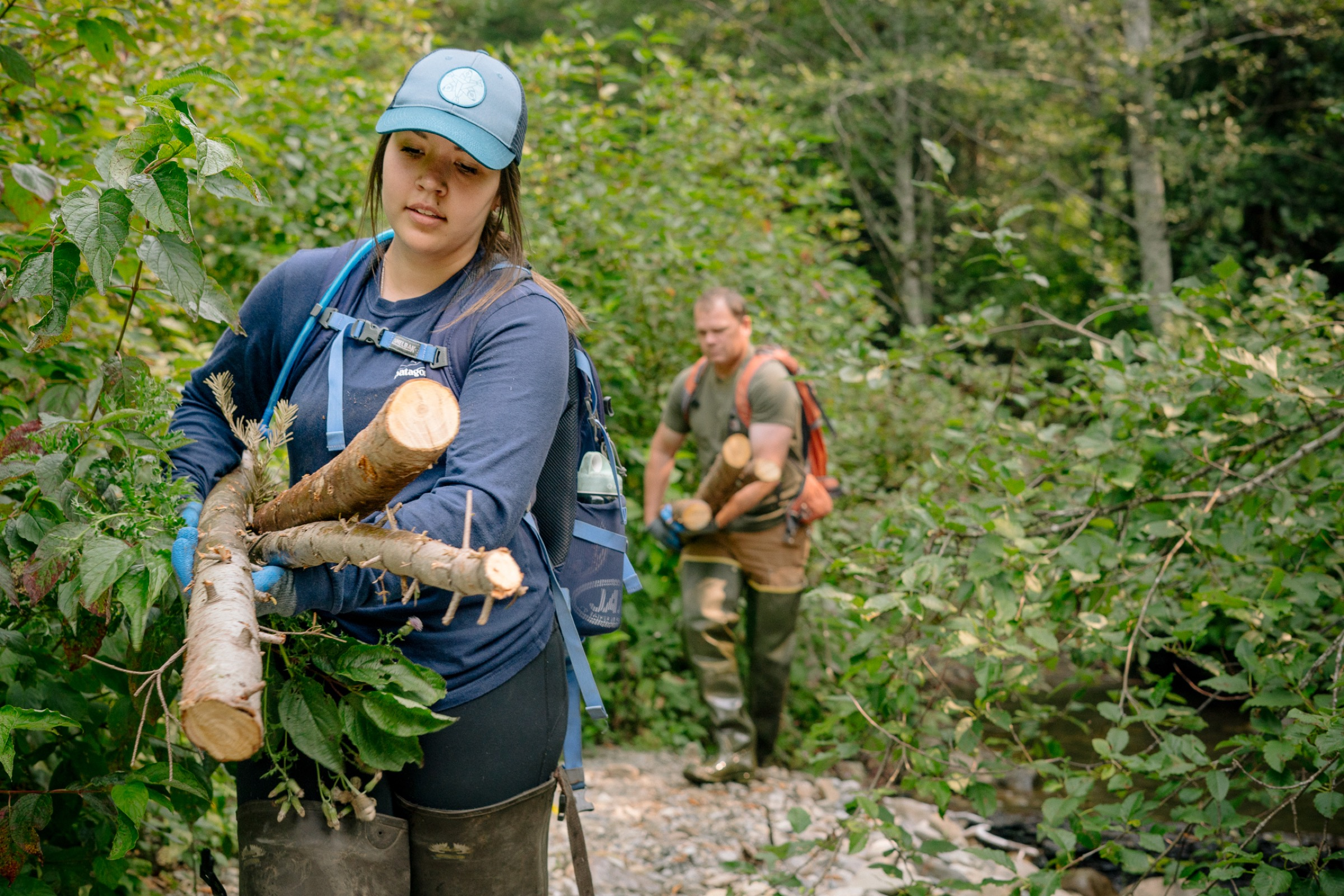Tulalip biologists and volunteers haul tree trunks and branches to a section of stream where they plan to construct a beaver dam analogue.