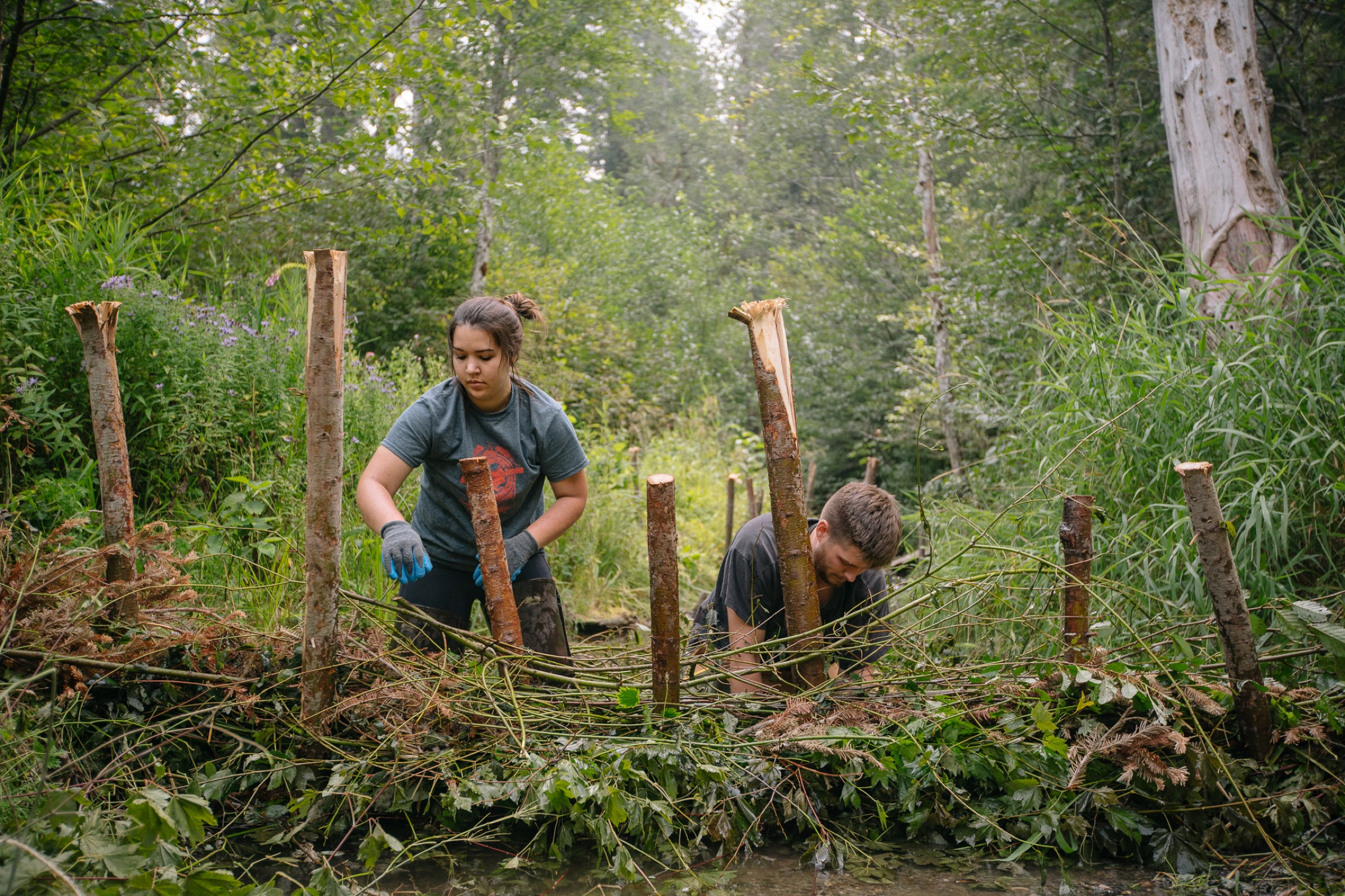 Team members weave branches and other vegetation through a framework of vertical posts to complete the dam. They hope that this temporary structure will provide relocated beavers with a home base and a head start as they begin to do their own ecological engineering.