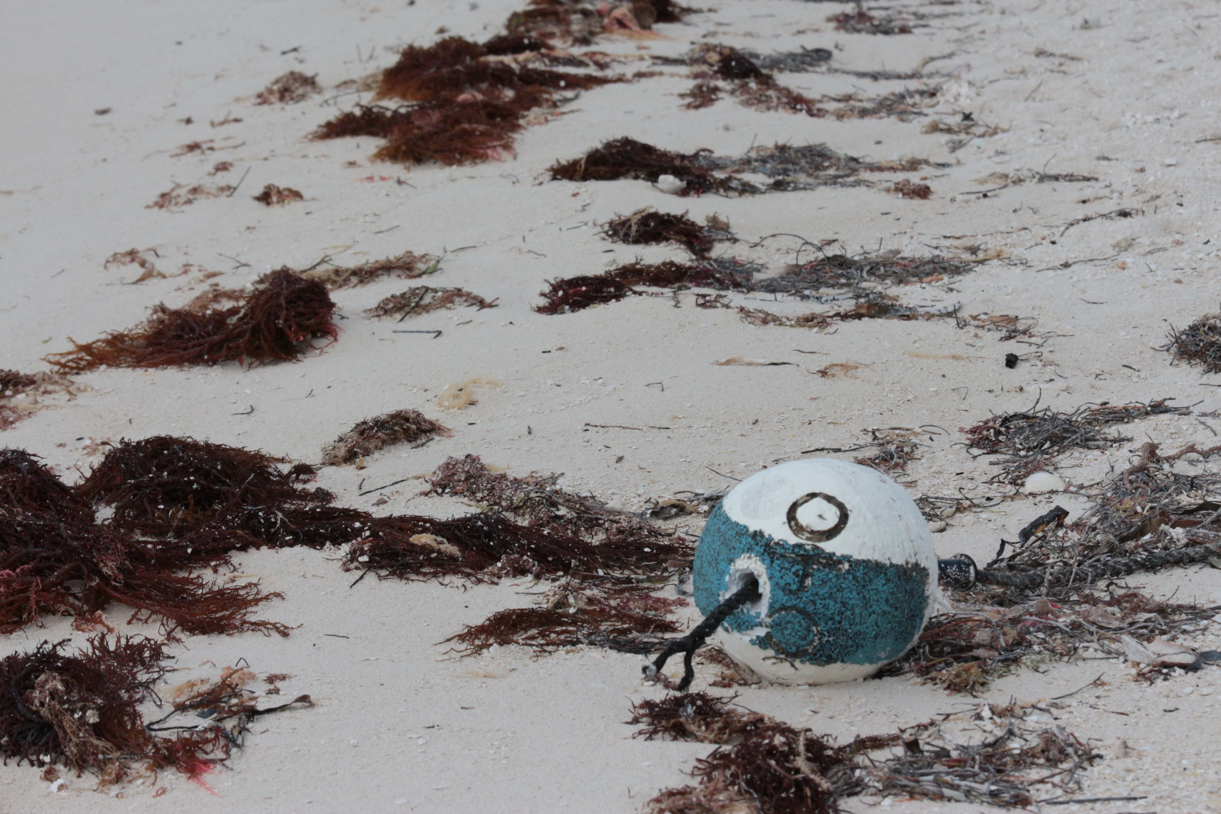 A fishing buoy on a beach in the Florida Keys is a subtle reminder of the devastation Hurricane Irma left in its wake. Photograph by Hannah Hoag