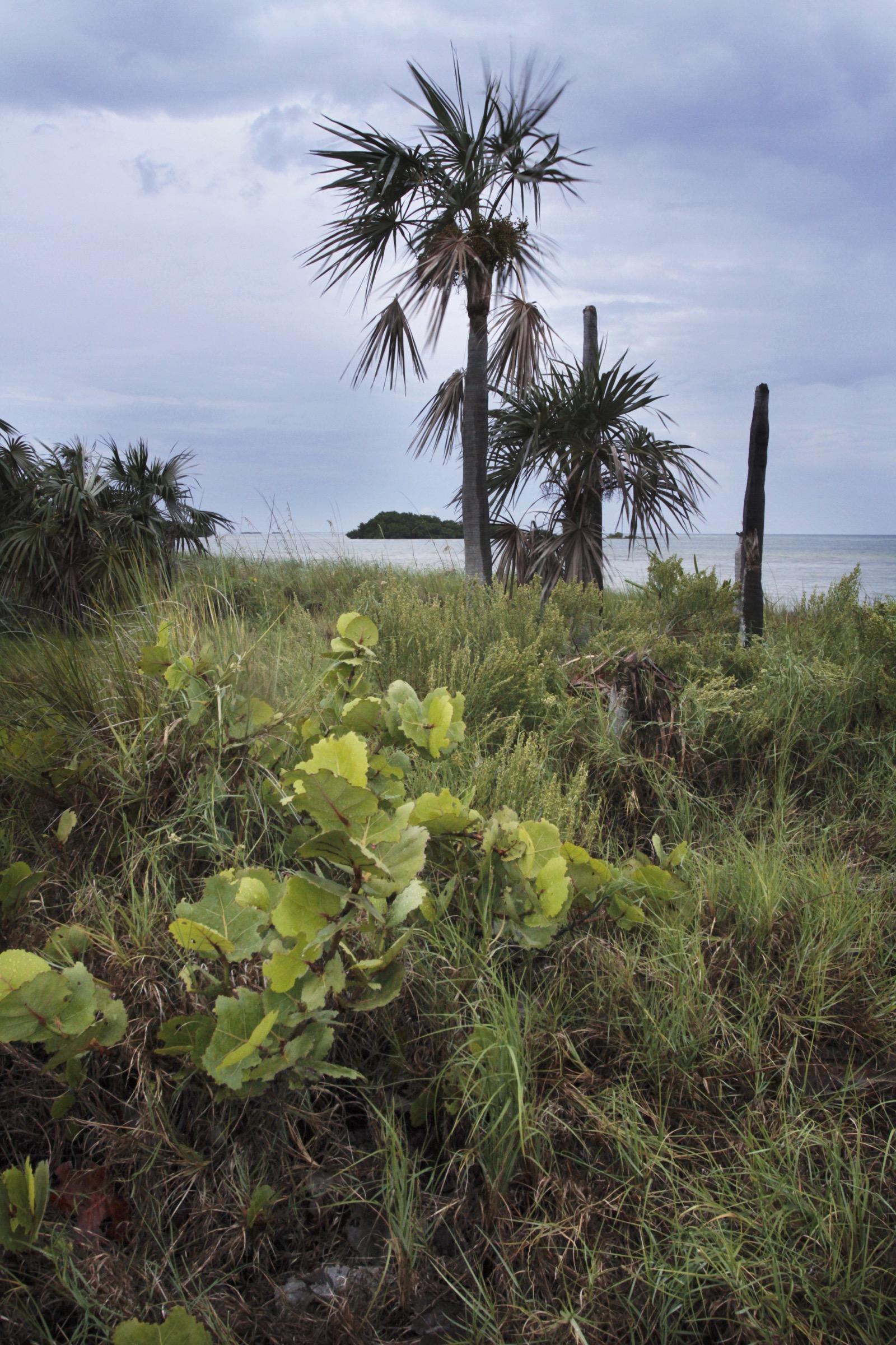 Habitat containing important host plants, like Florida Keys blackbead and gray nickerbean, can still be found on remote keys like Bahia Honda. Photograph by Chad Anderson