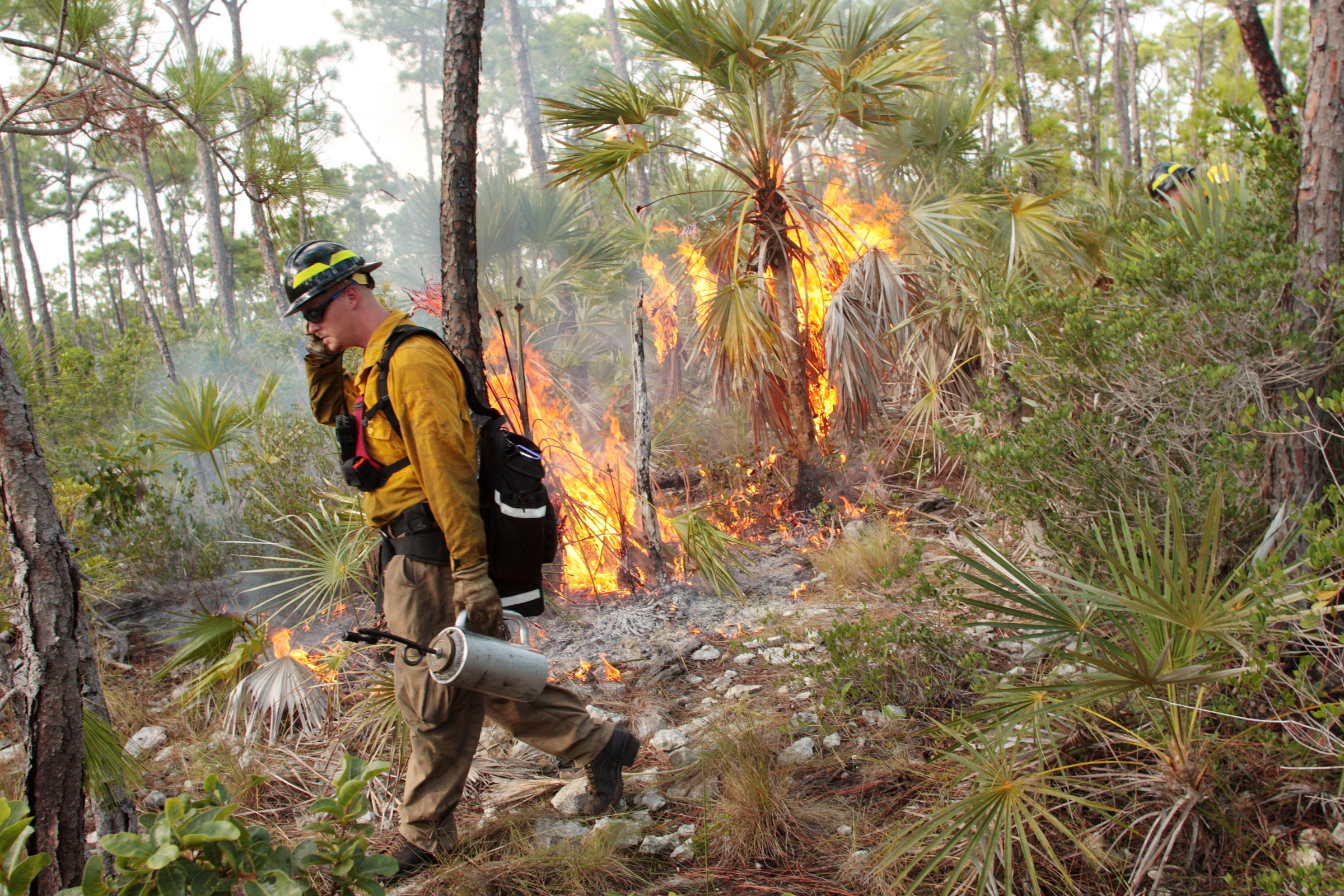A firefighter ignites a prescribed burn in the pine rocklands of South Florida as a means of restoring one of the natural forces that has shaped this ecosystem for centuries. Photograph by Chad Anderson