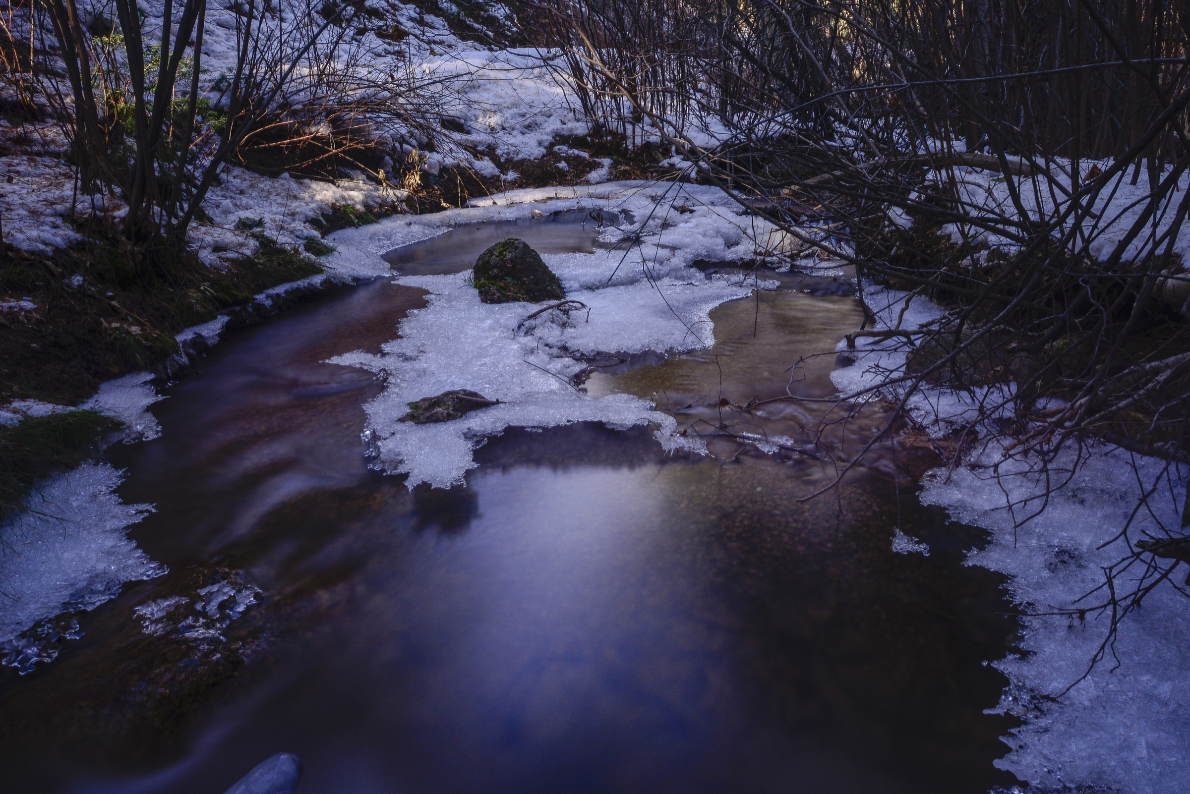 Bear Creek, an isolated stream on Pike's Peak's southern slope, home to the last remaining wild population of true greenback cutthroat trout (<em>Oncorhynchus clarkii stomias</em>), is the starting point of the second round of efforts to restore the subspecies to its former range. Photograph by Lindsay Fendt