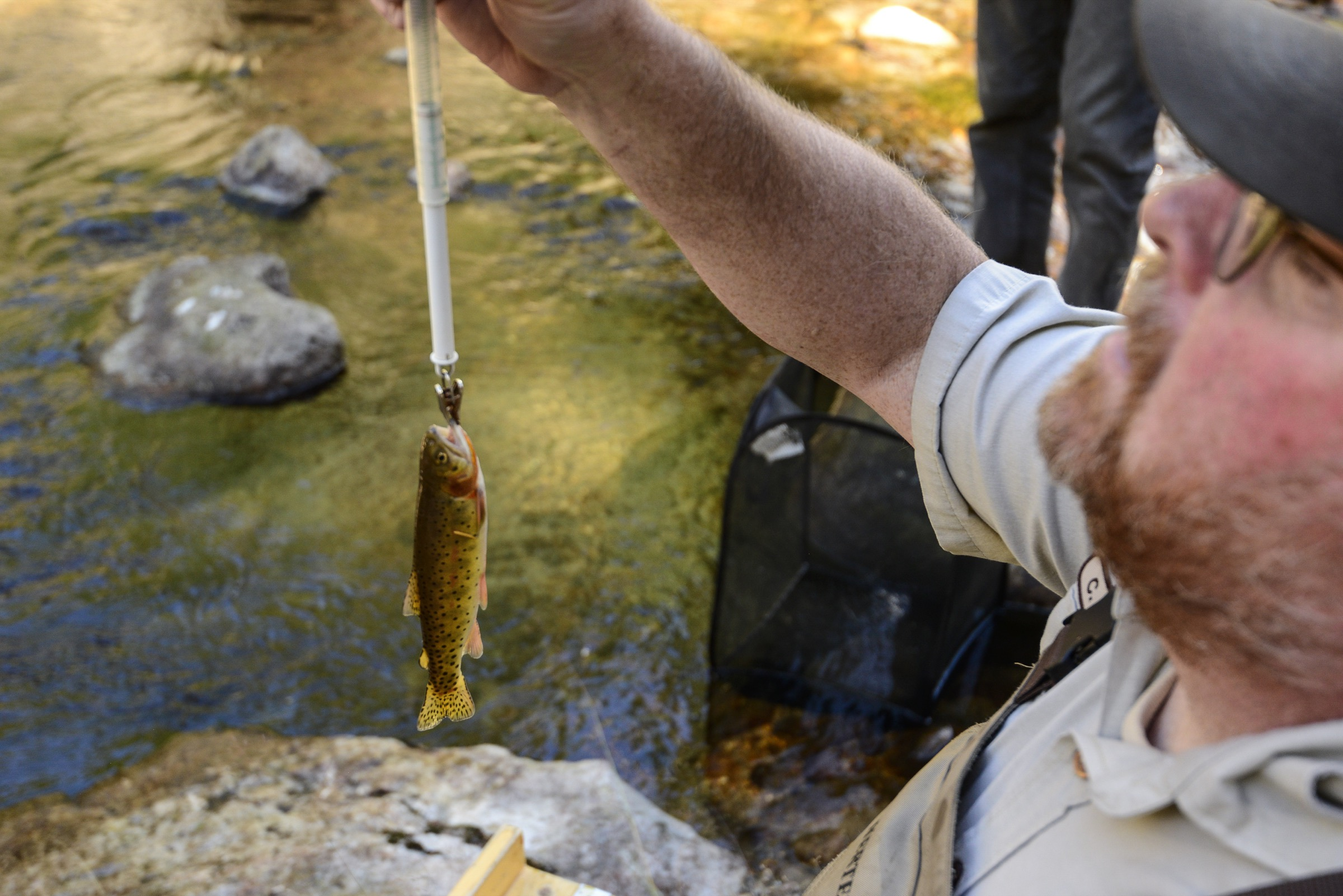 Biologist Chris Kennedy weighs a small cutthroat trout that he and his team caught electrofishing in Rocky Mountain National Park's West Creek.Photograph by Lindsay Fendt