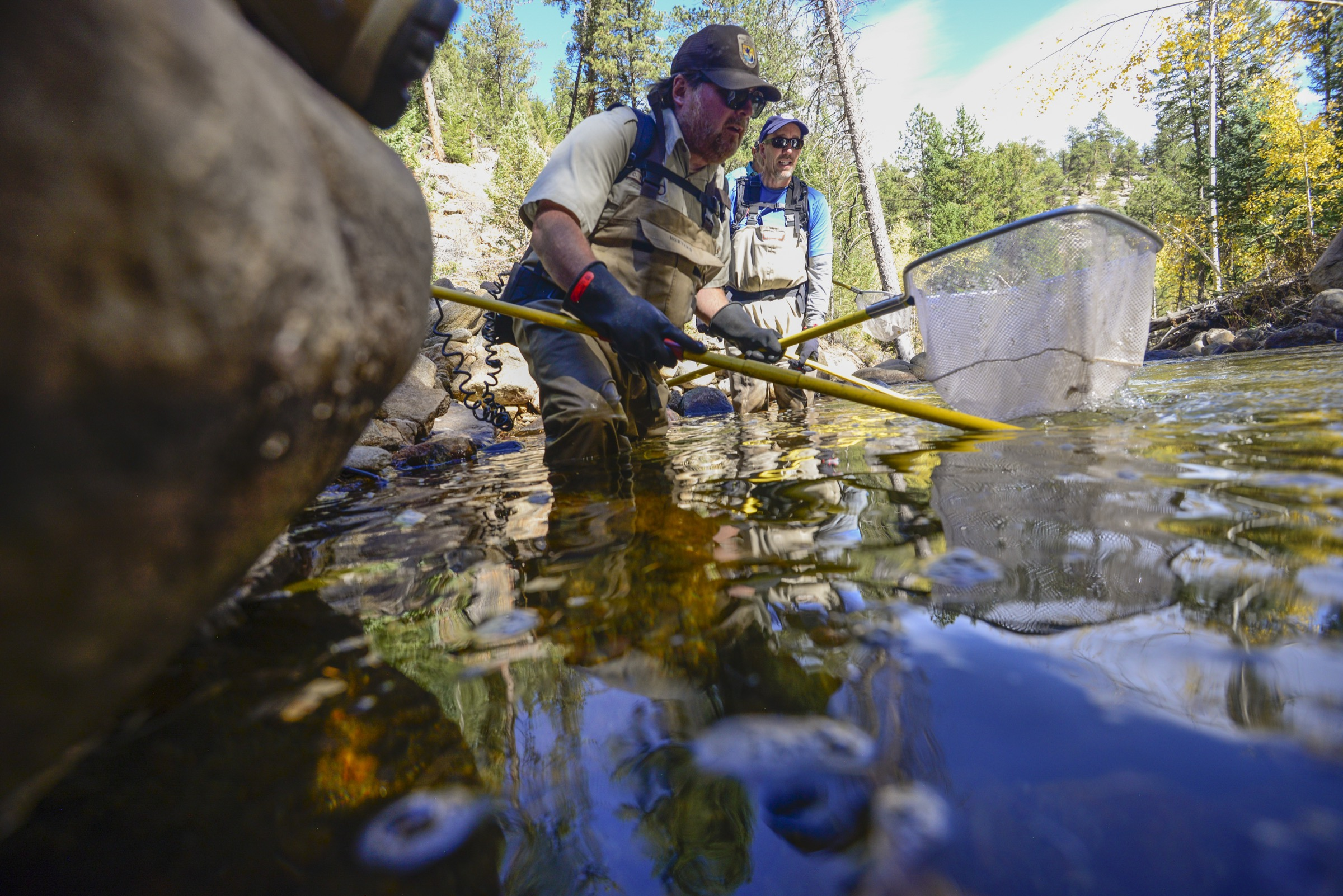 U.S. Fish and Wildlife Service biologist Chris Kennedy works to remove cutthroat trout from the waters of Rocky Mountain National Park's West Creek—trout that he and others helped establish here in years past. Photograph by Lindsay Fendt