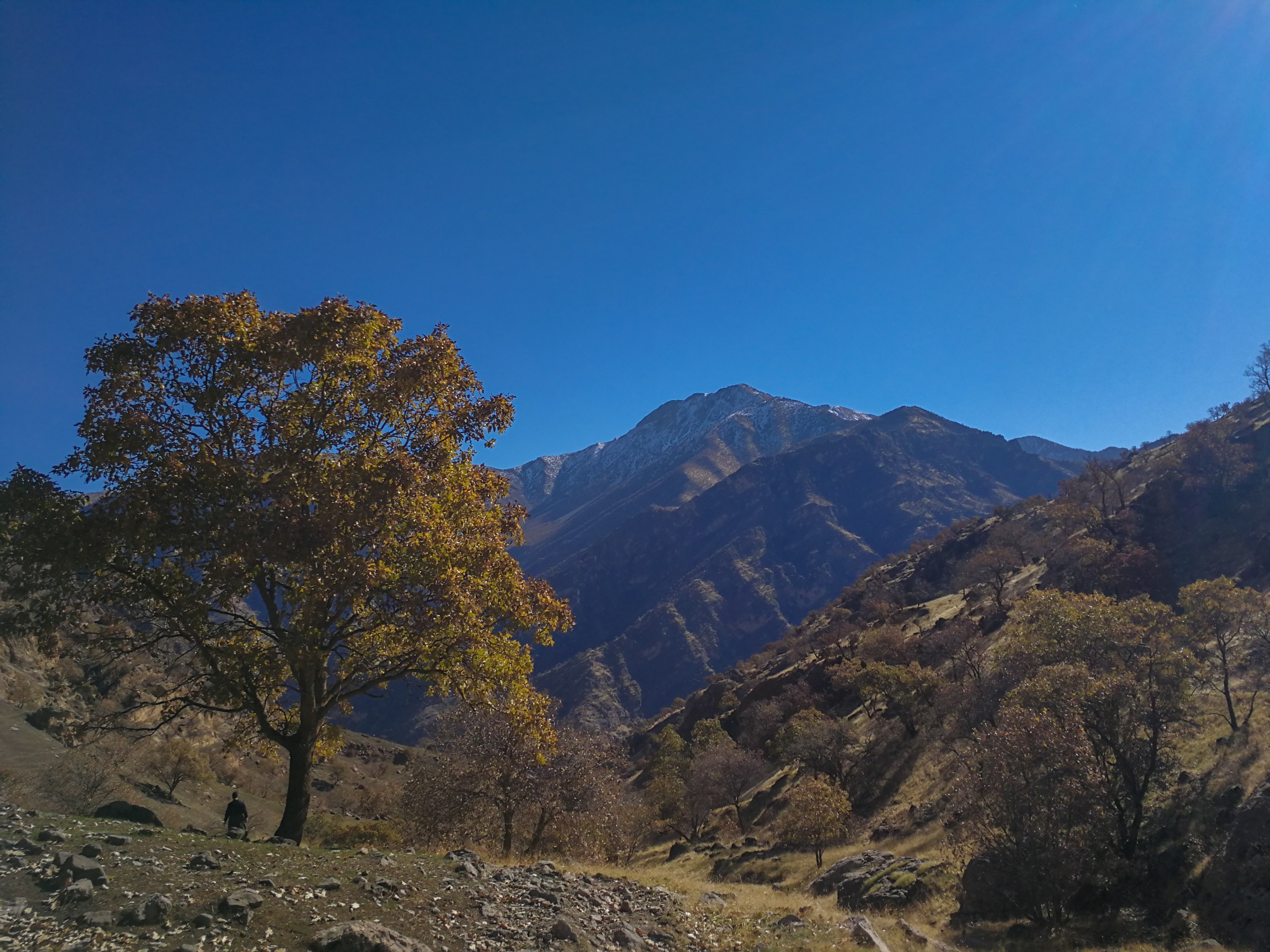 A lone oak tree stands amidst the unrelenting landscape of the Kurdish mountains of northern Iraq. Photograph by Korsh Ararat