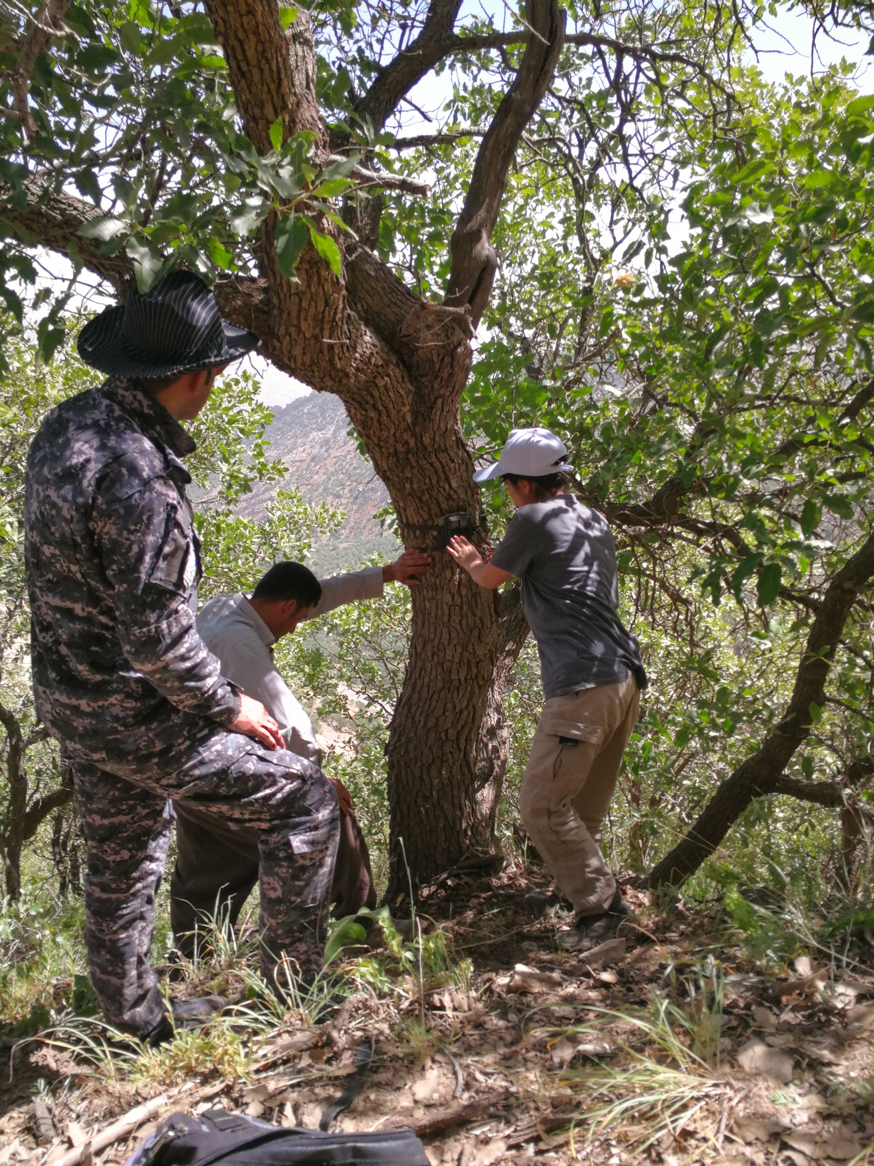 Hana Raza and others from Nature Iraq attach a camera trap to a tree in hopes of capturing the image of a member of Iraq's small but resilient population of Persian leopards. Photograph by Korsh Ararat