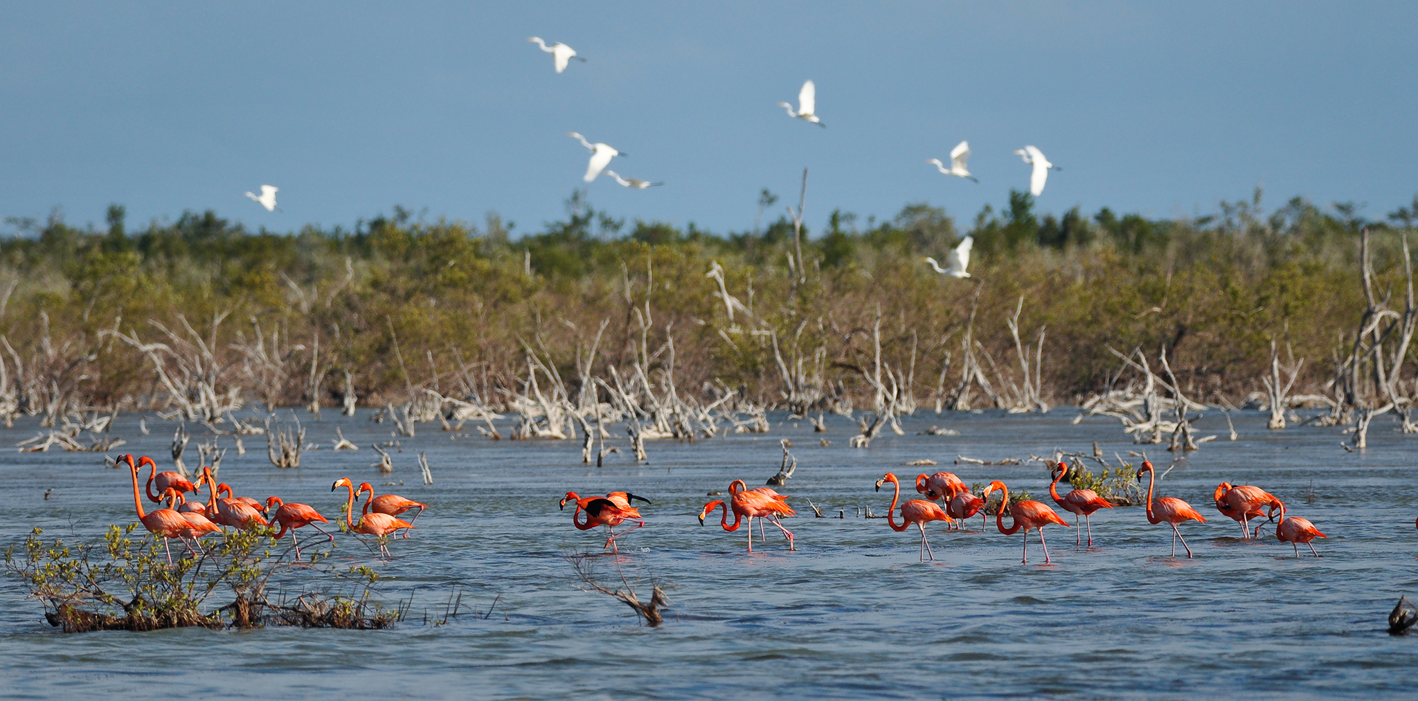 West Indian flamingoes (Phoenicopterus ruber) are just one of many species that benefit from Andros Island's vast stretches of undeveloped coastline. Photography by Marc Guitard/Getty