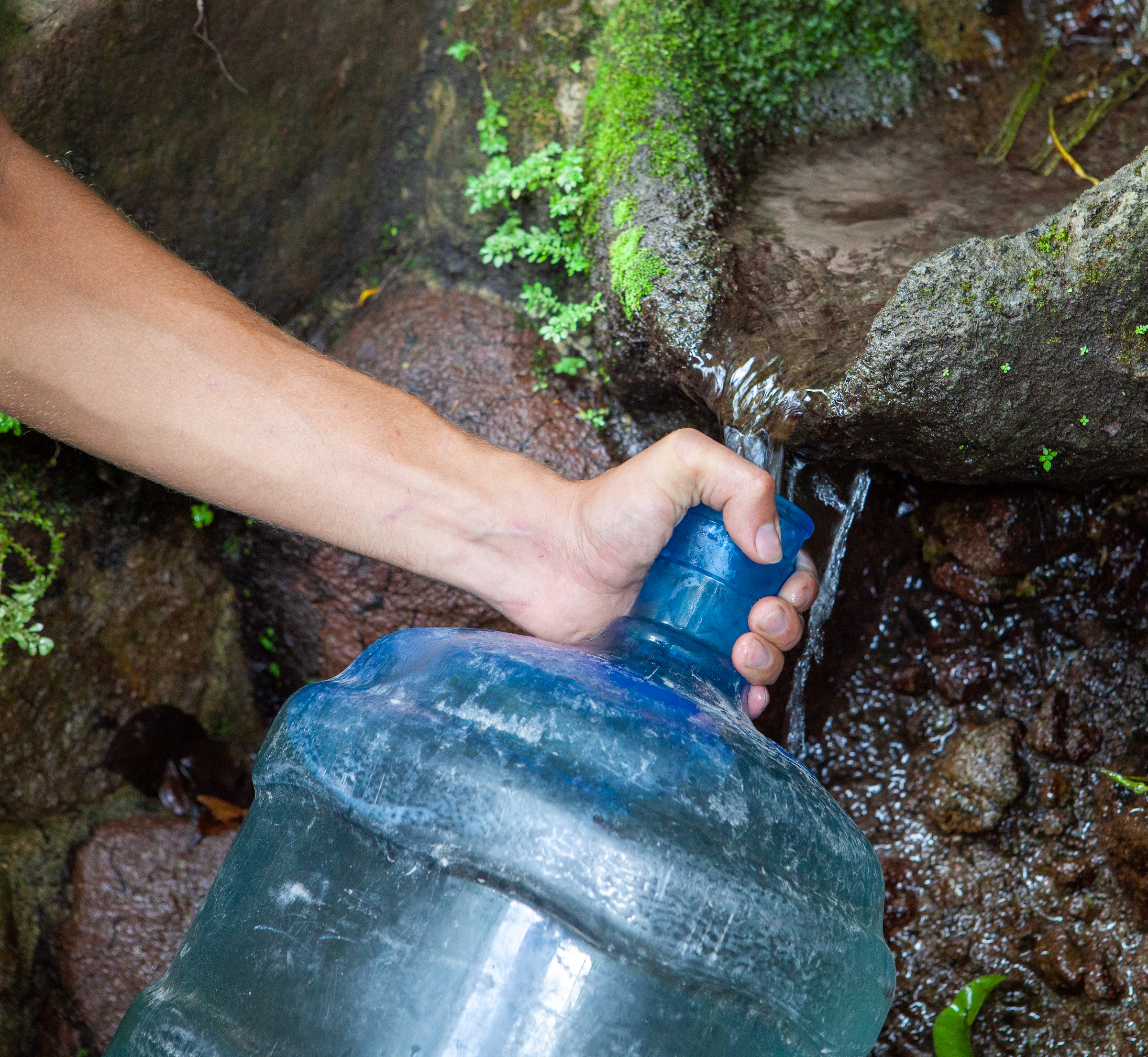 Luke Jones fills a water jug from Runaway Ghaut on Montserrat to replenish the artificial ponds that he and the rest of the Mountain Chicken Recovery Programme have constructed.	Photograph by Geoffrey Giller