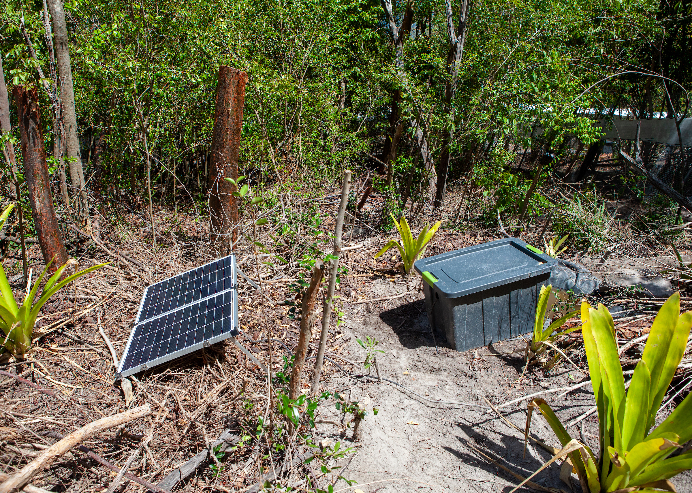 Within an enclosure on a Montserrat hillside, Luke Jones constructed a small pond that uses solar power to stay warm enough to kill chytrid. Jones and the rest of the mountain chicken team hope that ponds such as these will help the frogs fend off the devastating fungus.	Photograph by Geoffrey Giller
