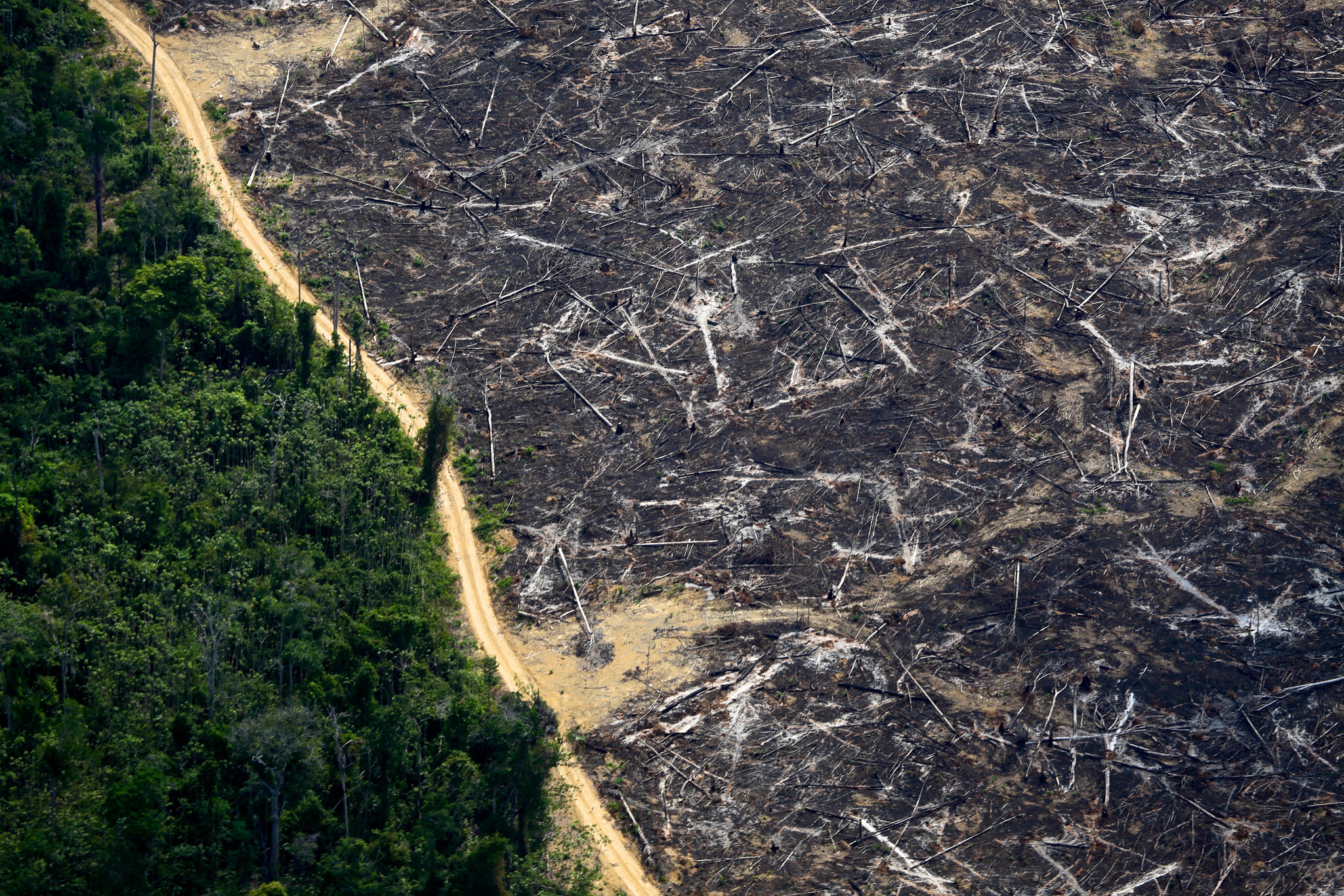 The black remnants of a burned forest contrast with the green of living trees in northern Mato Grosso. Photograph by Rodrigo Baleia