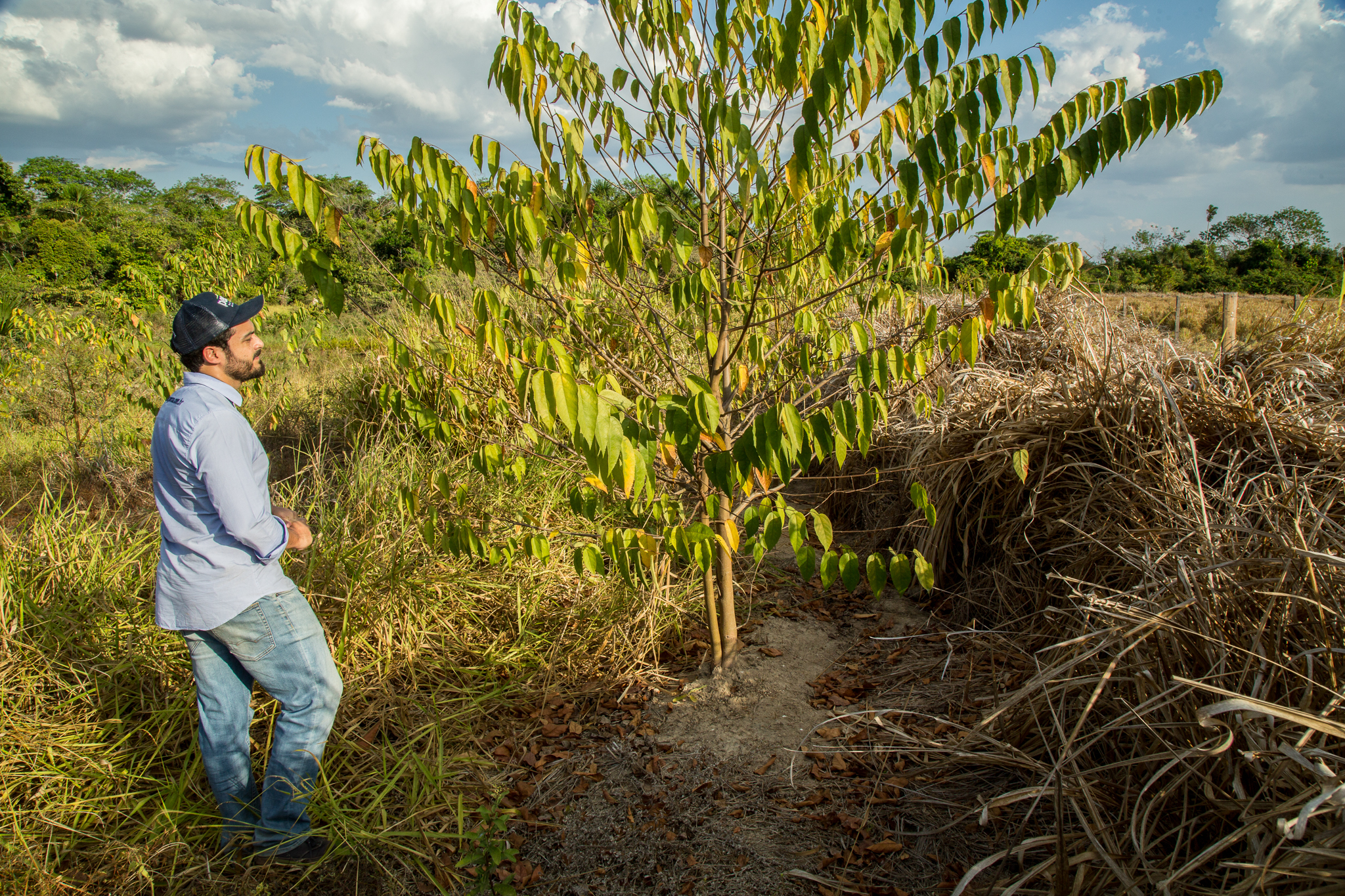 Pedro Nogueira of Pecsa inspects a leguminous tree planted two years ago to repair the soil. Leguminous trees fix nitrogen and help create favorable conditions for other plant species to move in and fill out the riparian forest. Photograph by Christina Selby