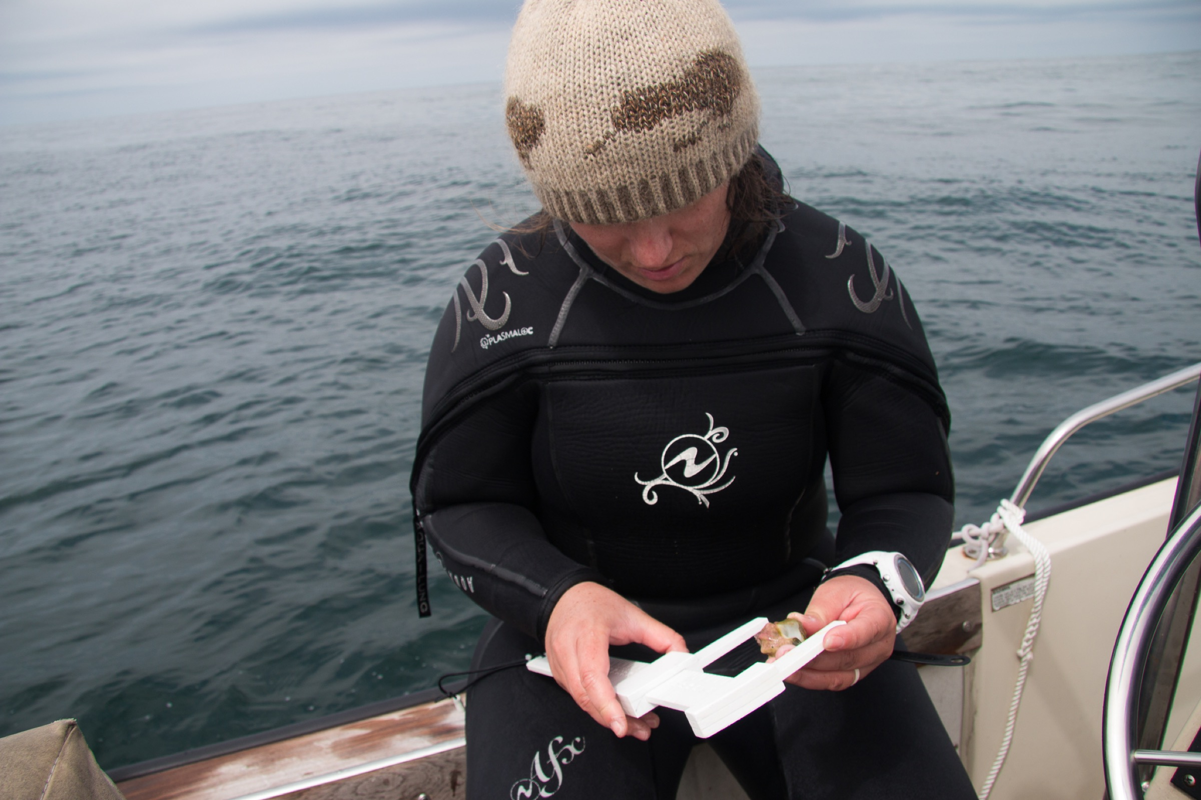 Marine scientist Jenny Hofmeister measures the length of a Kellet's whelk shell on board the Kelpfish. Photograph by Gloria Dickie.