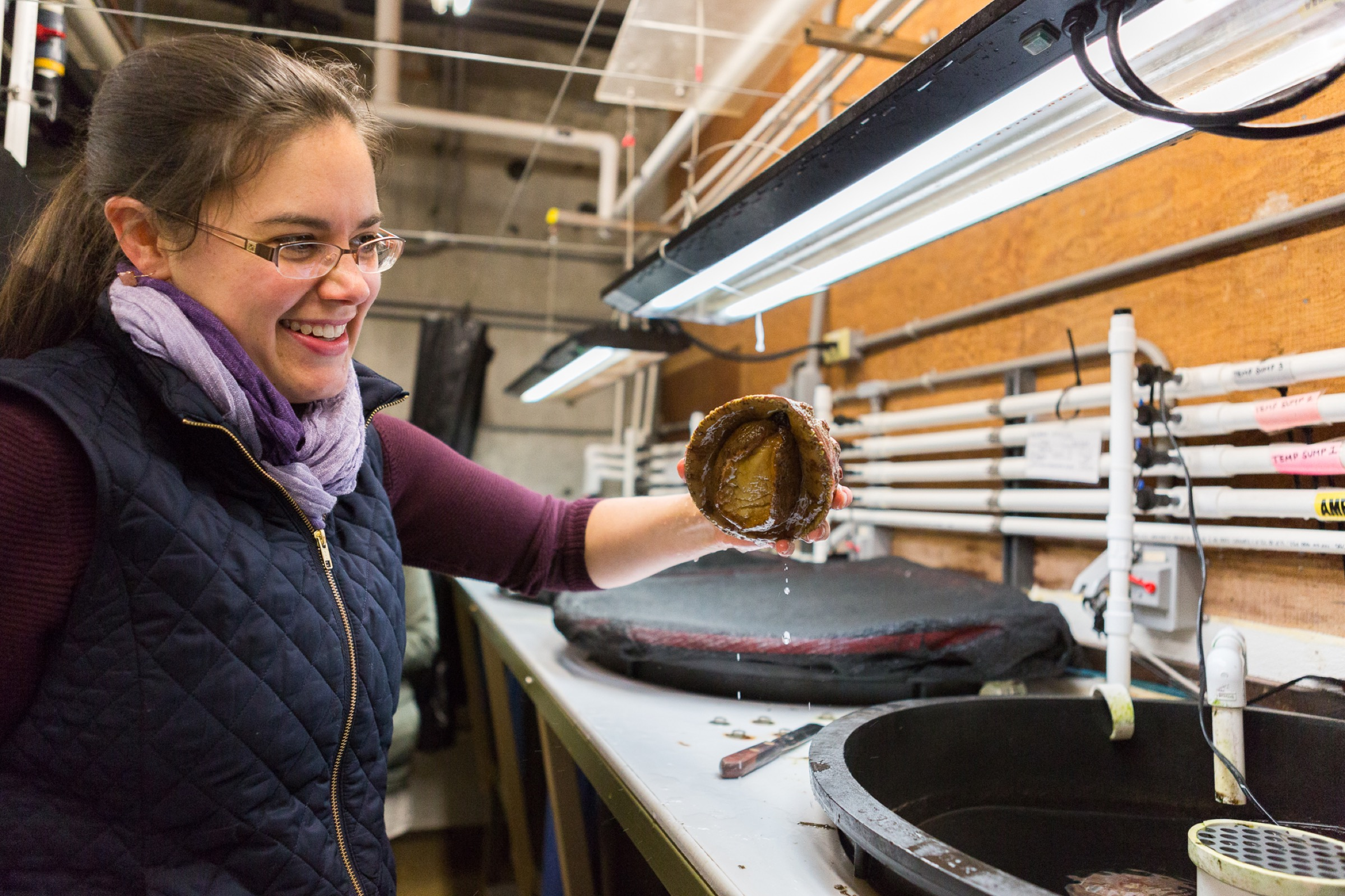 Kristin Aquilino holds up an abalone she has carefully scraped off the surface of a holding tank by sliding the spatula under its suctioning foot. White abalone are hemophiliacs, which means their blood doesn't clot, so to handle one is a nerve-wracking, delicate process.