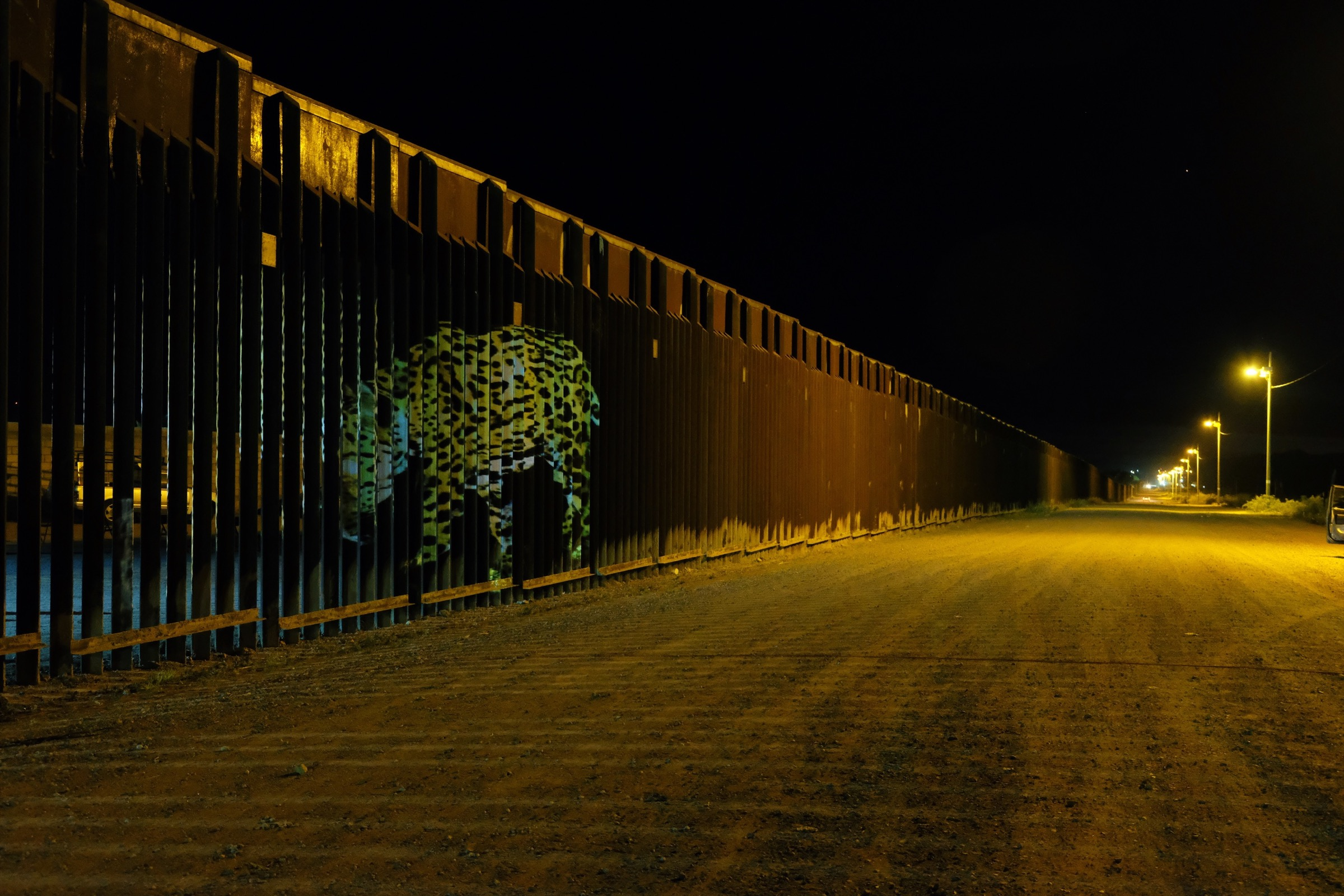 An photo of a wild jaguar captured by a camera trap is projected onto the border fence between Douglas, Arizona and Agua Prieta, Mexico during an event organized by the Northern Jaguar Project. Photograph by Julian Smith