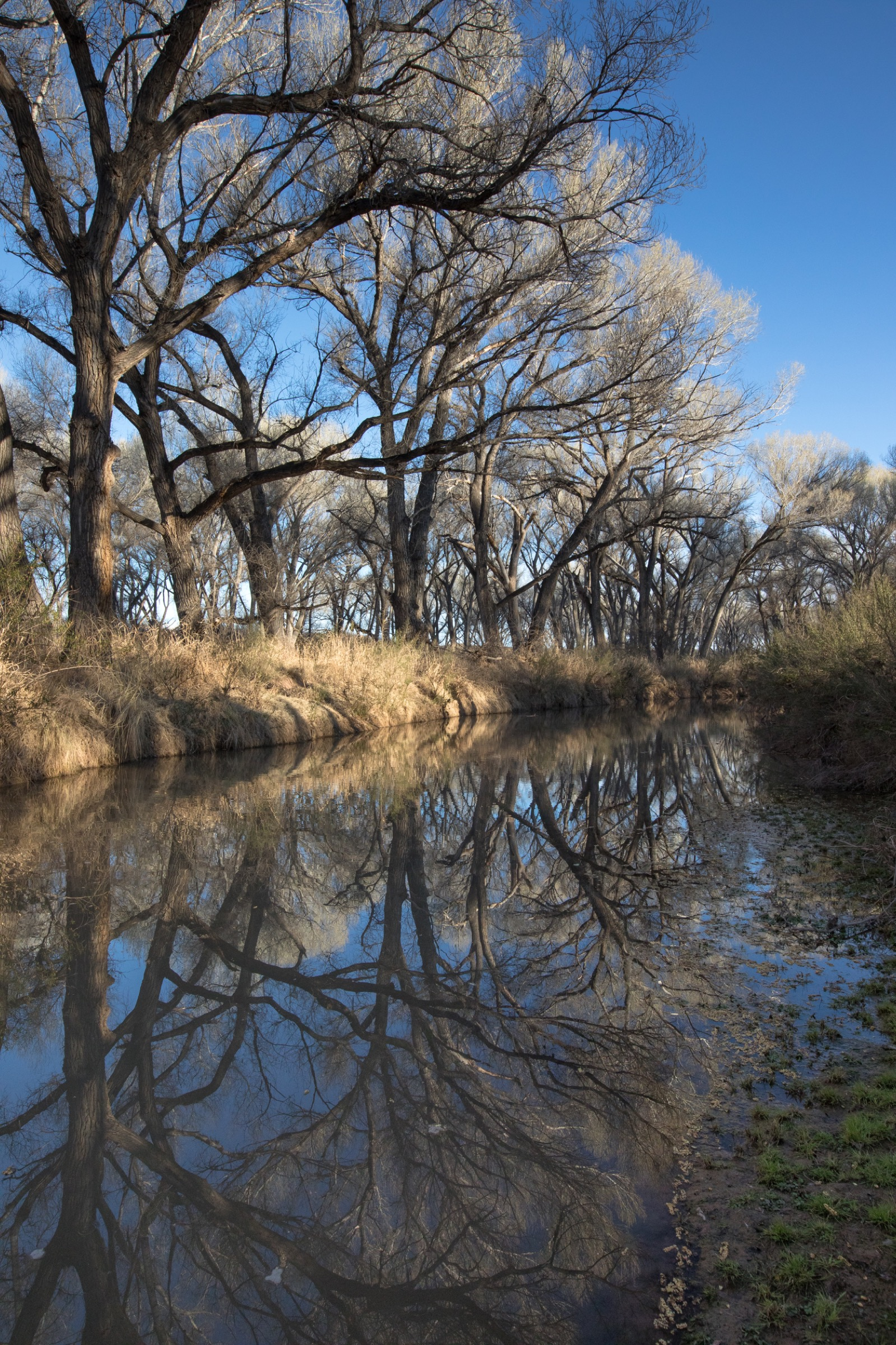The San Pedro River is one of the last undammed rivers in the U.S. Southwest and one of the most important wildlife corridors between the U.S. and Mexico. Photograph by Krista Schyler