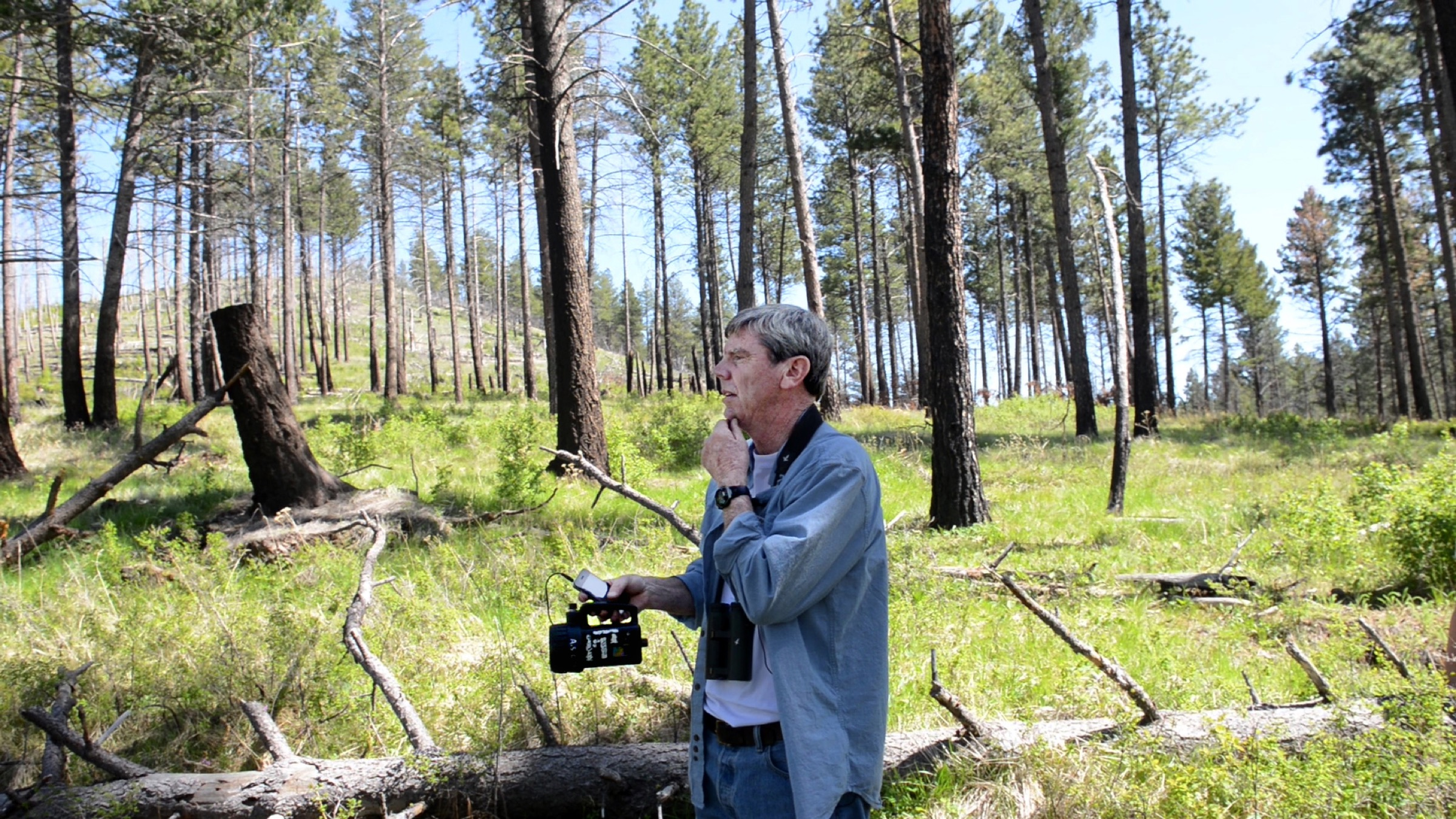 In a snag forest in Montana's Lolo National Forest, wildlife biologist Richard L. Hutto uses a speaker to broadcast the calls and pecks of a black backed woodpecker to draw others of that species. He notes that black-backed woodpeckers are extremely dependent on severely burned forests for their habitat. In turn, the woodpeckers create habitat for other animals. Photograph by Michael Kodas